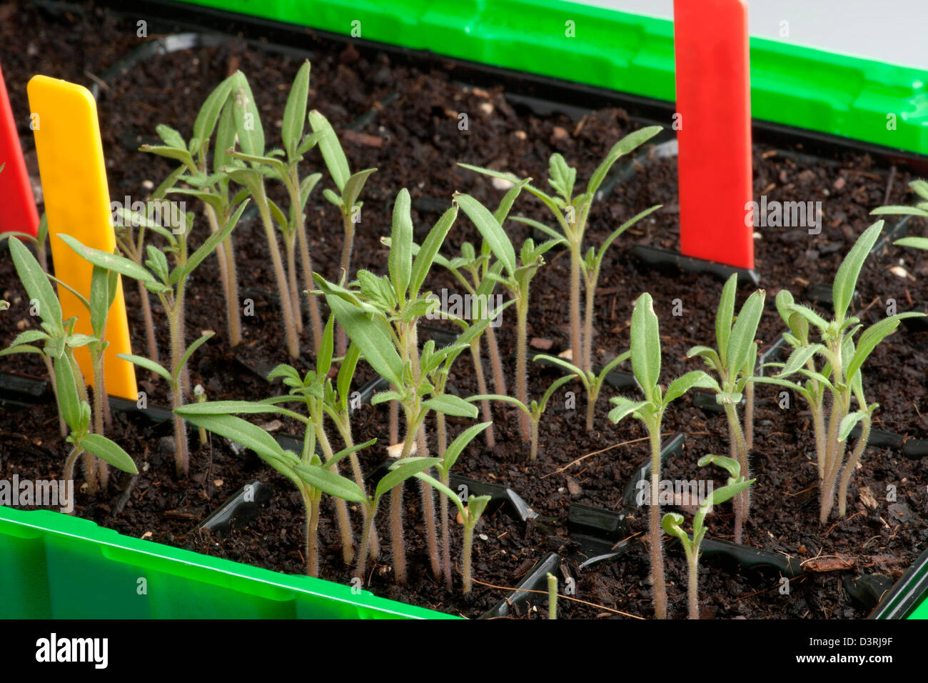 Upbringing seedling - Stock Image