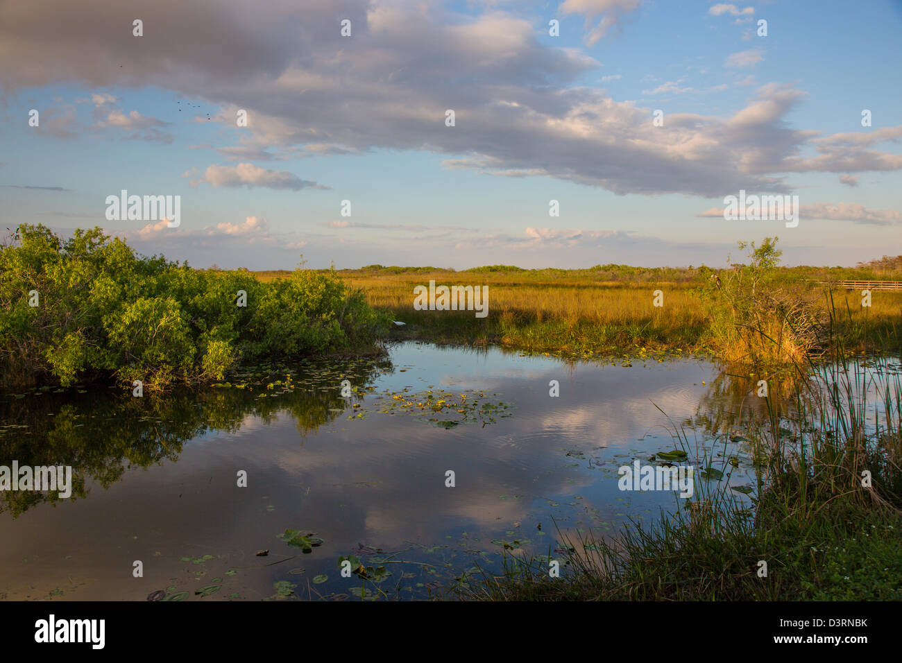 Everglades Stock Photos & Everglades Stock Images - Alamy