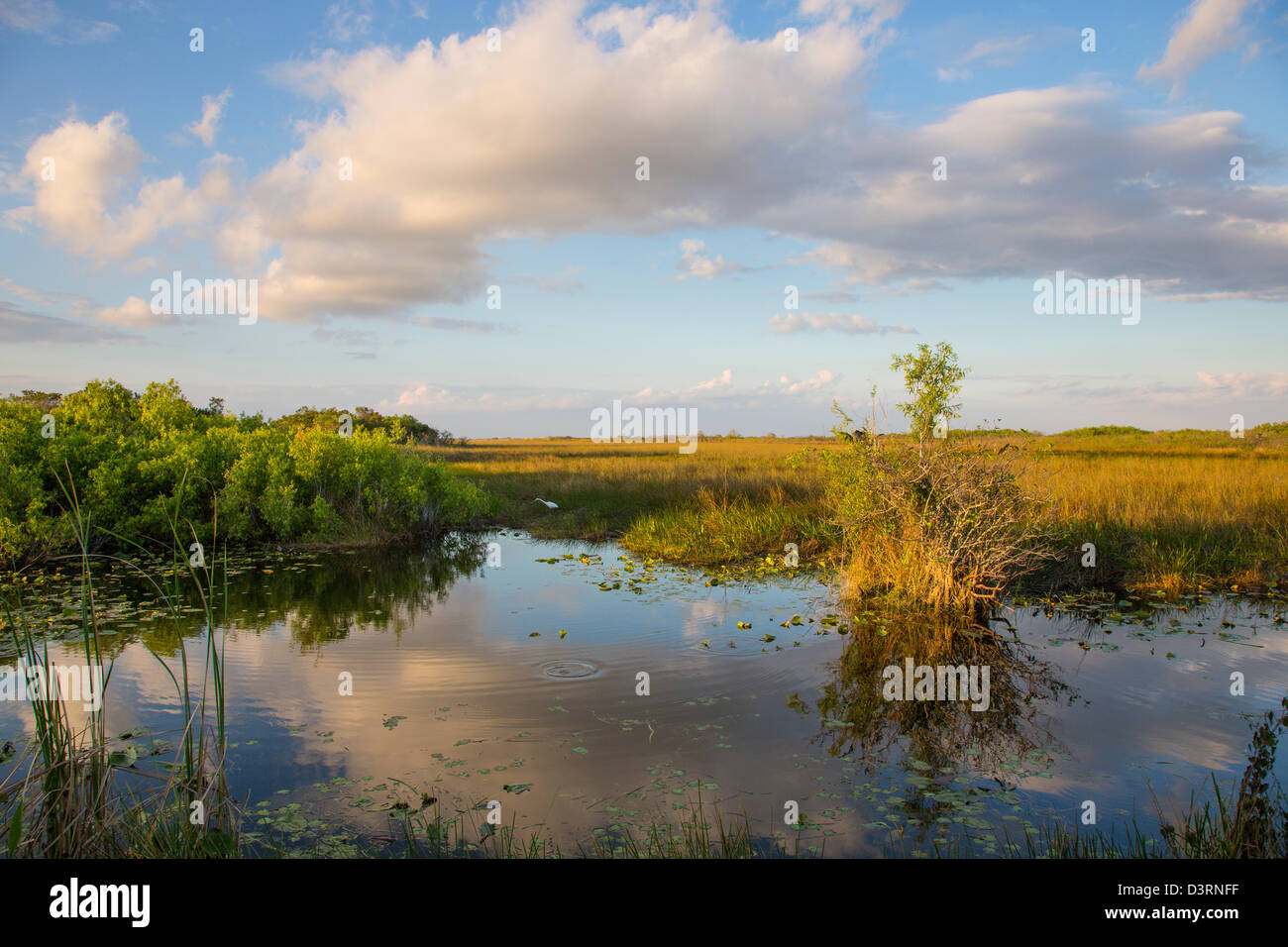 Anhinga Trail at the Royal Palm Visitor Center in Everglades National Park Florida - Stock Image