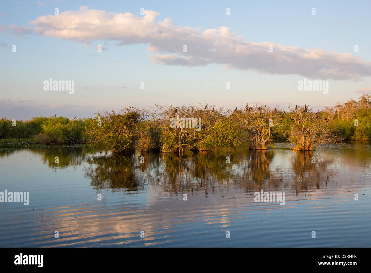 Birds in trees along Anhinga Trail at the Royal Palm Visitor Center in Everglades National Park Florida - Stock Image