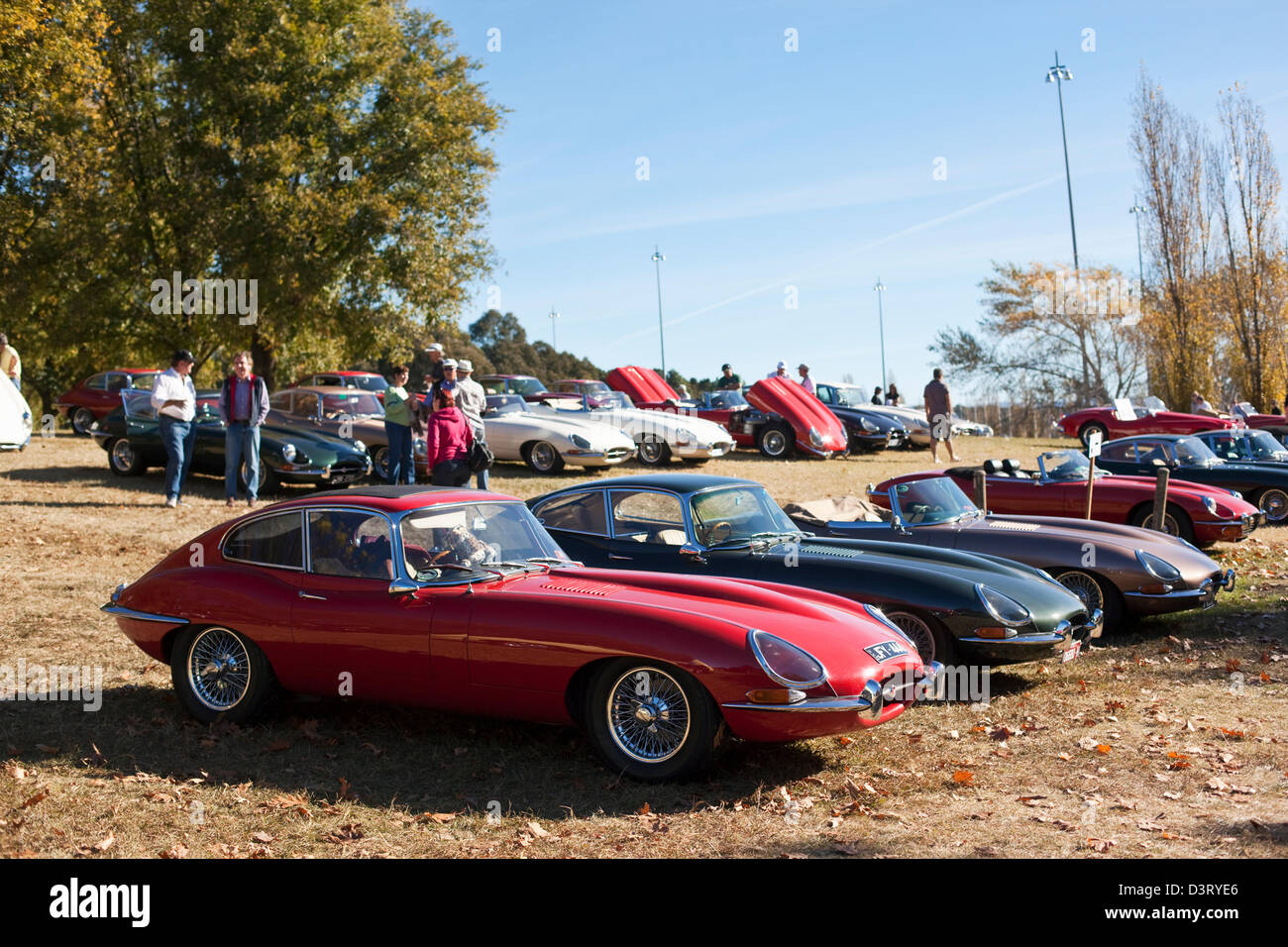 Vintage Jaguar car rally at Parkes. Canberra, Australian Capital Territory (ACT), Australia - Stock Image