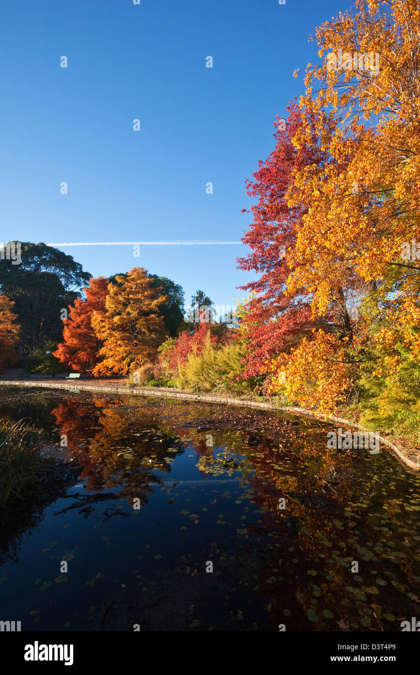 Autumn colours in park.  Commonwealth Park, Canberra, Australian Capital Territory (ACT), Australia - Stock Image