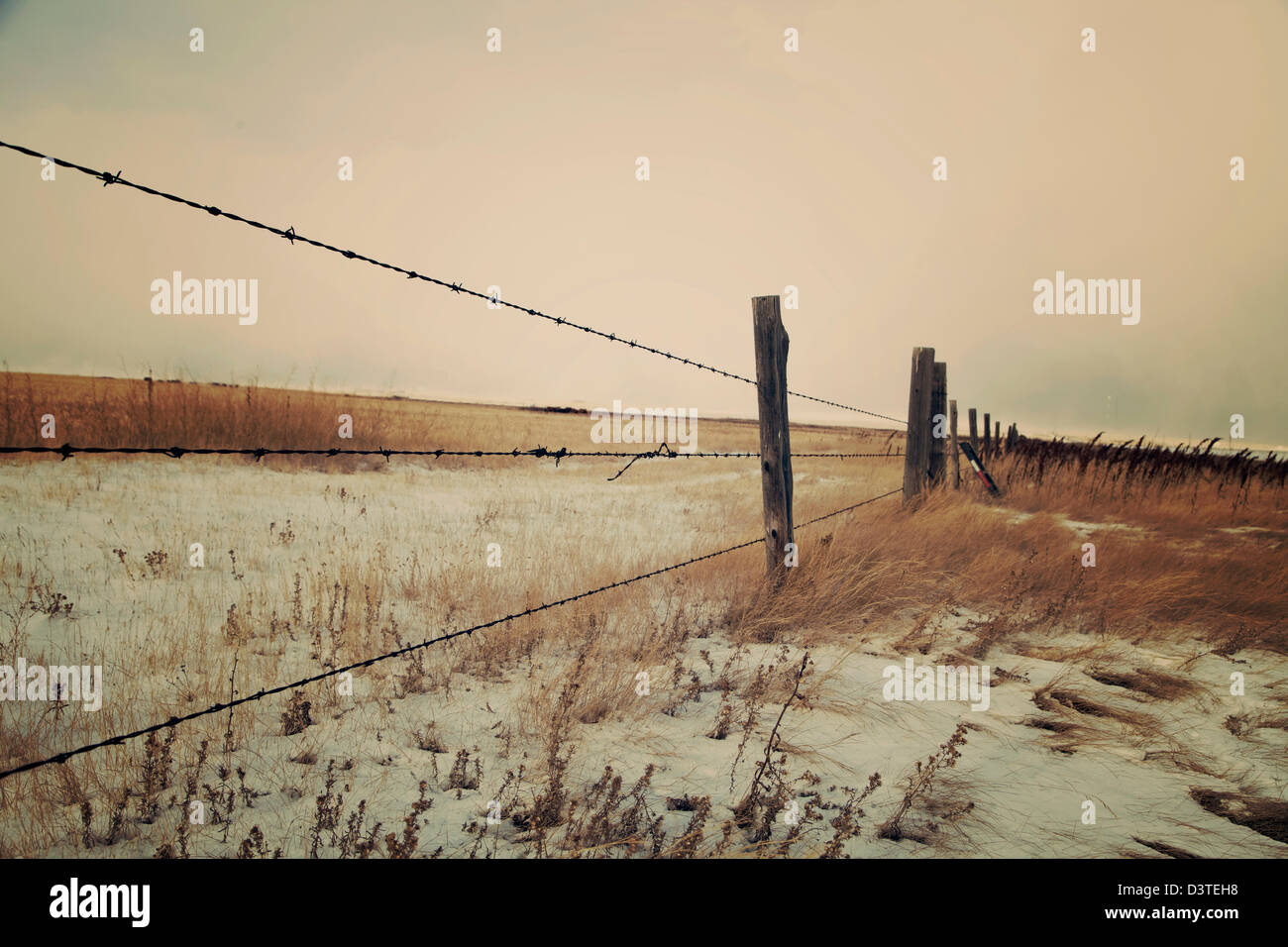 Prairie fence, early winter morning. Barb wire and fence posts, golden grass, and early morning sunlight. - Stock Image