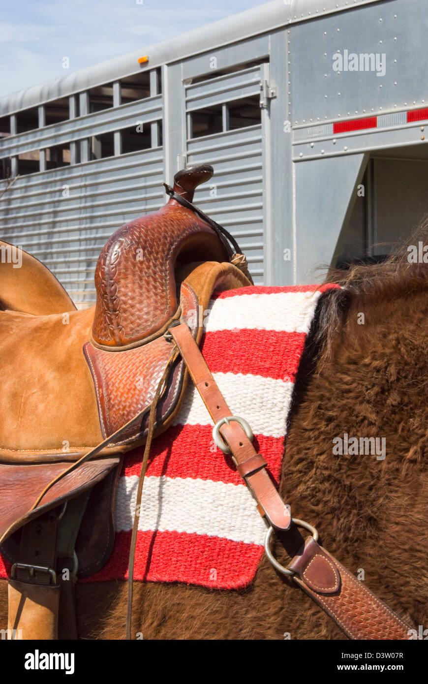 Horse under western saddle ready for horseback rider, American flag blanket under and trailer behind. - Stock Image