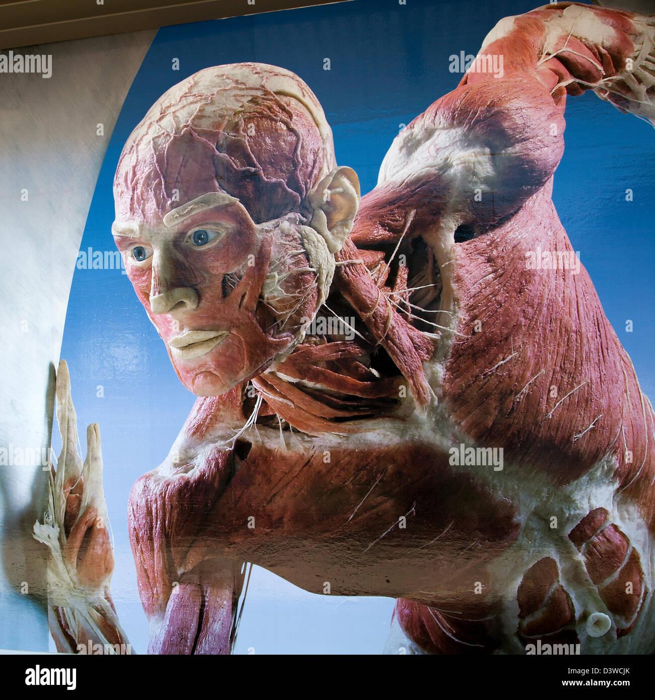 Gunther von Hagen\'s Body Worlds Show Poster in Cape Town - South ...