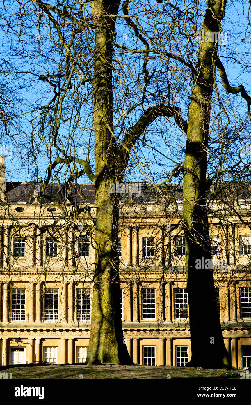 Imposing Georgian Terraced houses in the circus, Bath, with two winter leafless trees in the foreground. - Stock Image