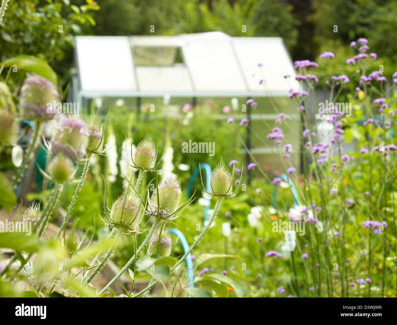 Allotment greenhouse - Stock Image