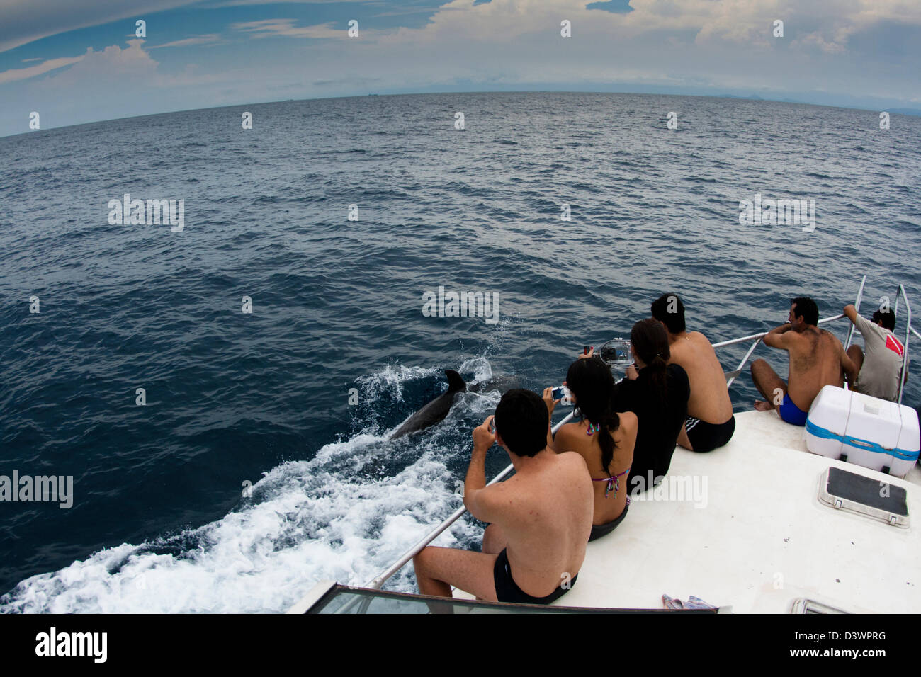 tourists looking at dolphins free on the sea.  Laje de Santos, Sao Paulo, Brazil - Stock Image
