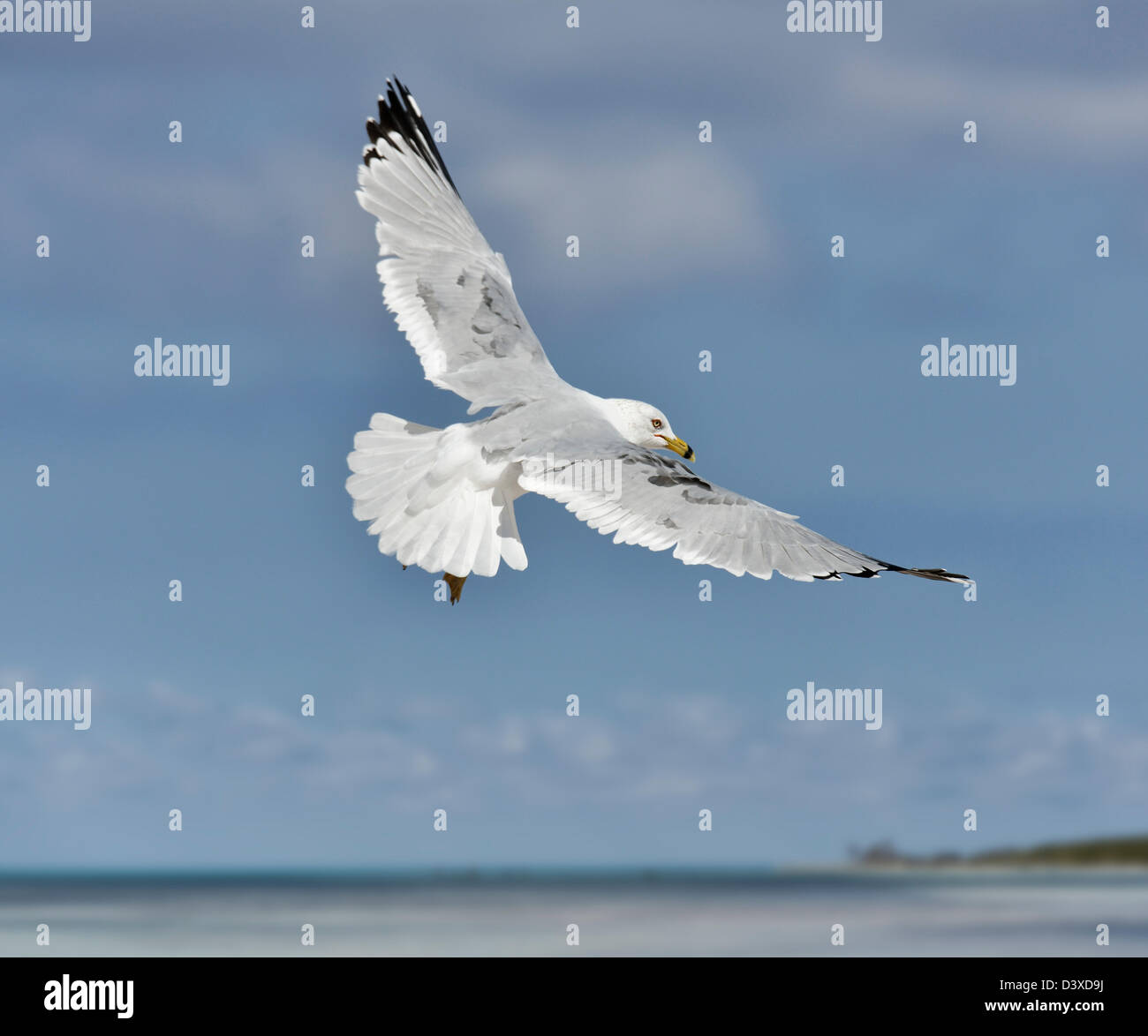 A Seagull, Soaring In The Blue Sky - Stock Image