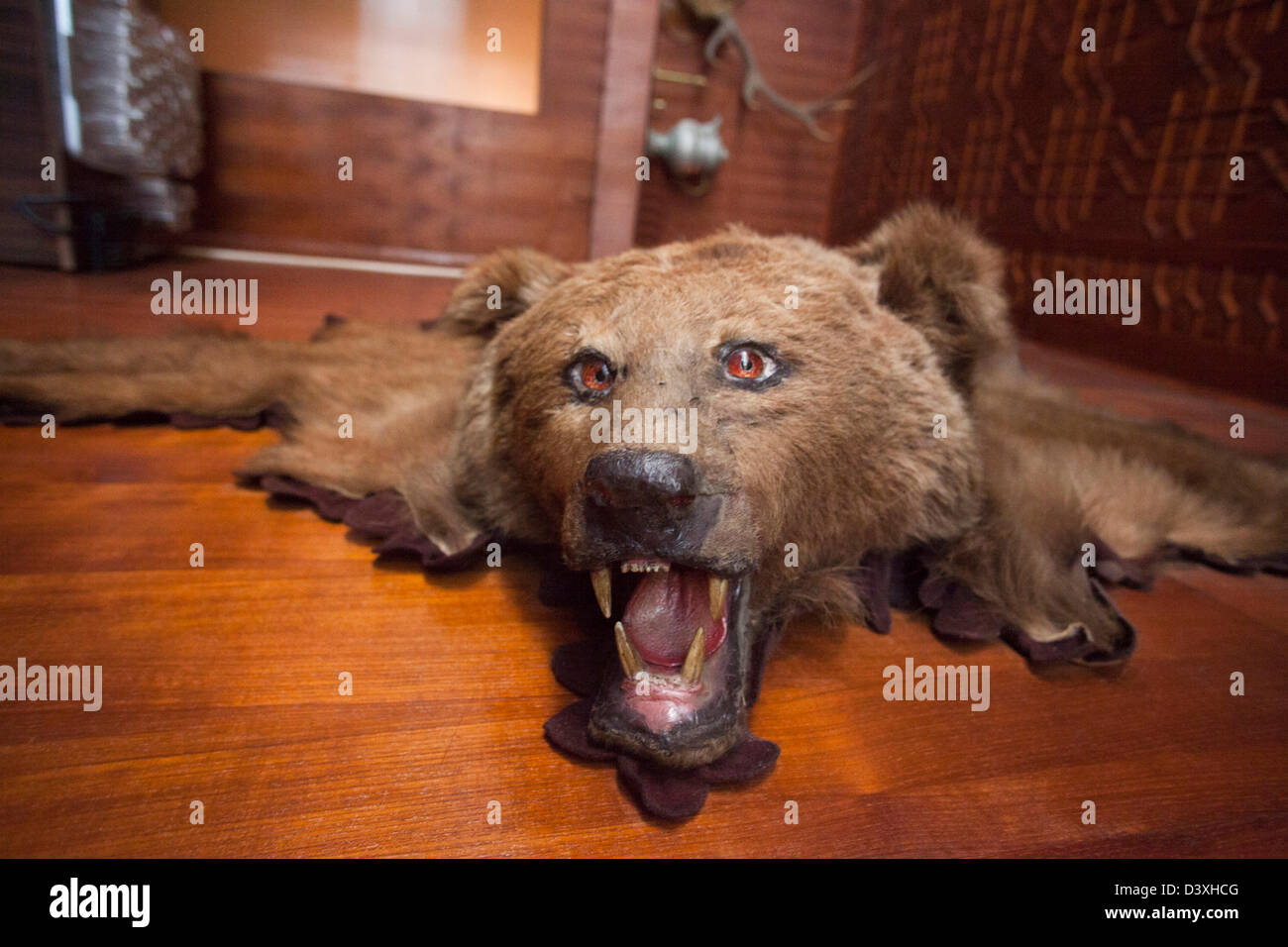 name skin bear forum water showthread mb size damages attachment jpg flood rug views