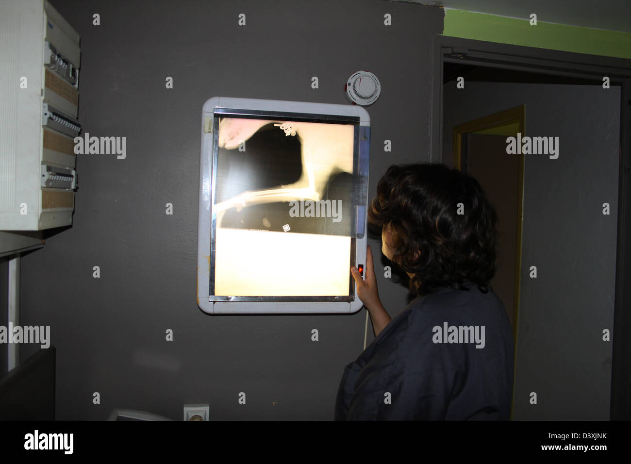 Veterinary Examining X Rays of a dog Stock Photo