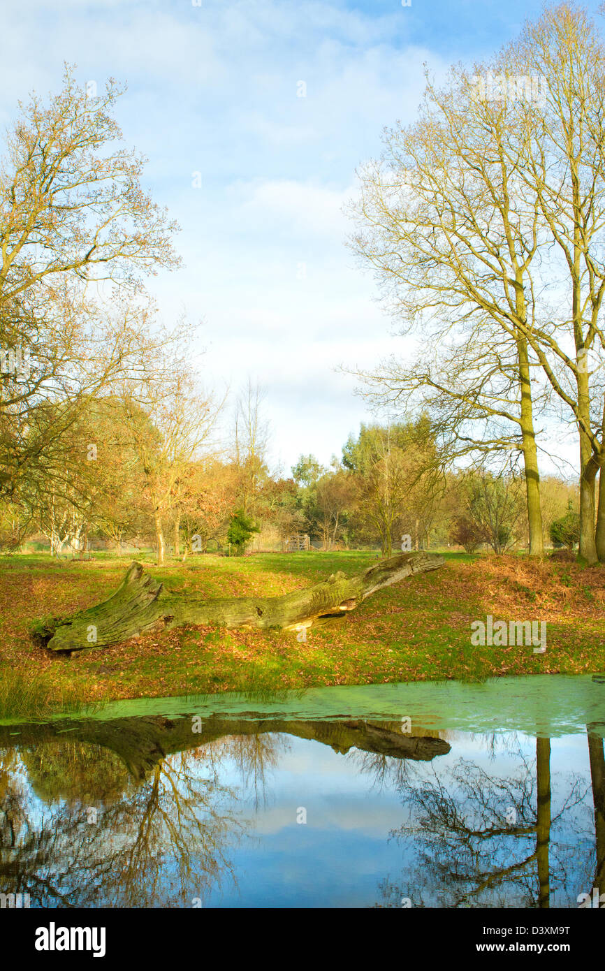 Marks Hall Estate, Braintree, Essex. A view inside the grounds on a cold spring day - Stock Image