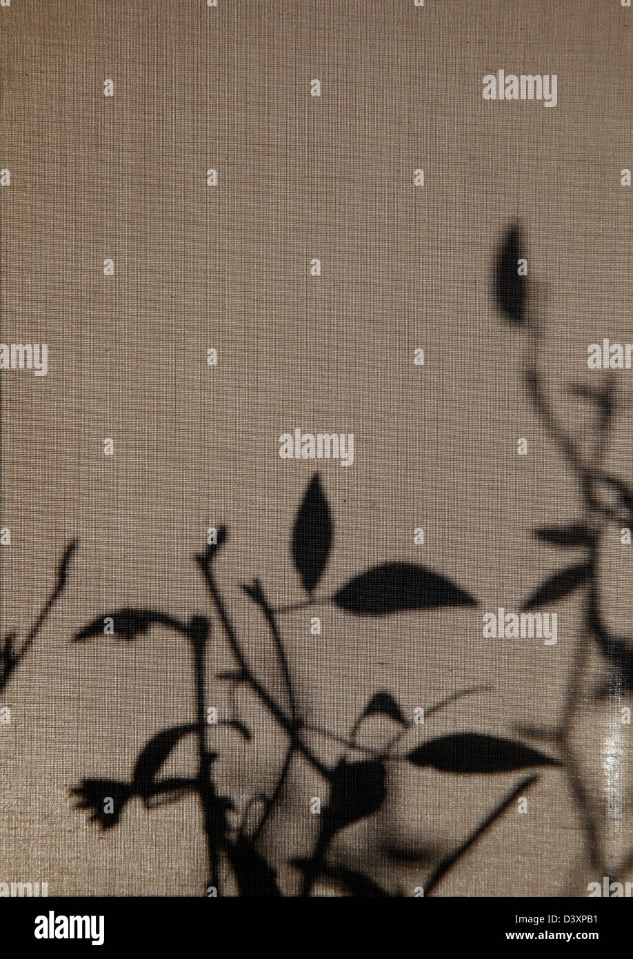 Branch And Leaf Shadow On Window Blind Stock Photo 54063381 Alamy