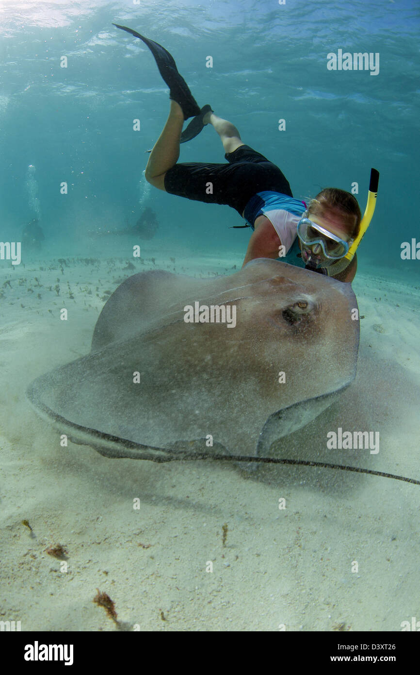 Snorklers and scuba divers interact with Stingrays at Stingray City - Stock Image