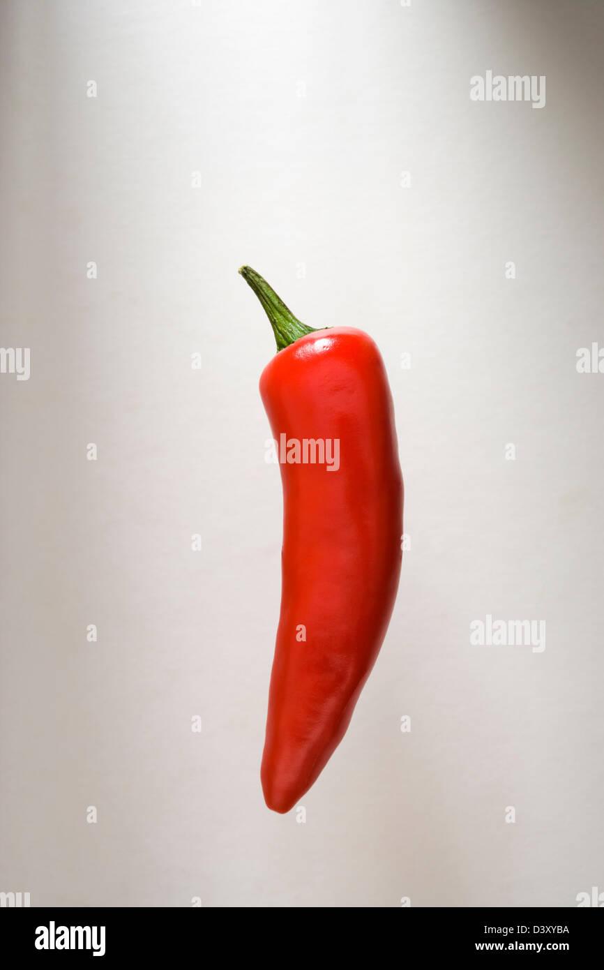 Red chilli pepper. - Stock Image