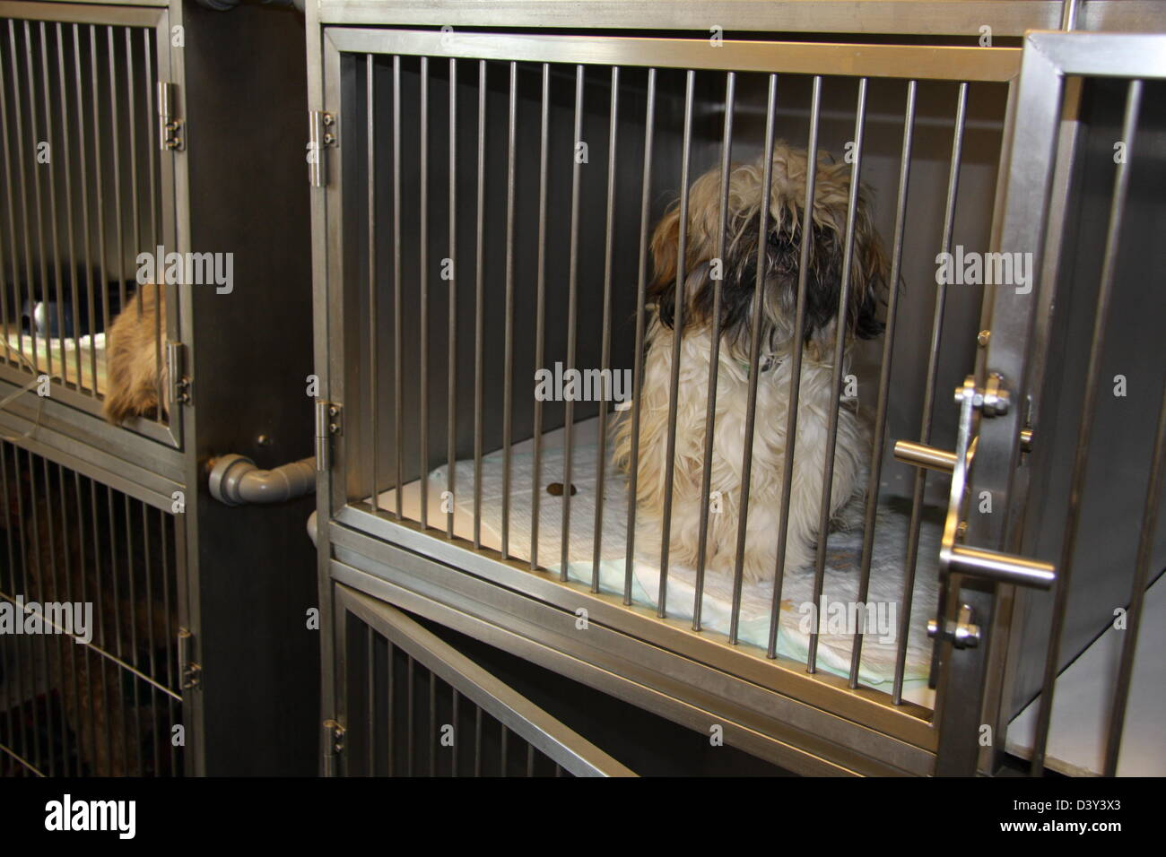 dog in a cage at the vet - Stock Image
