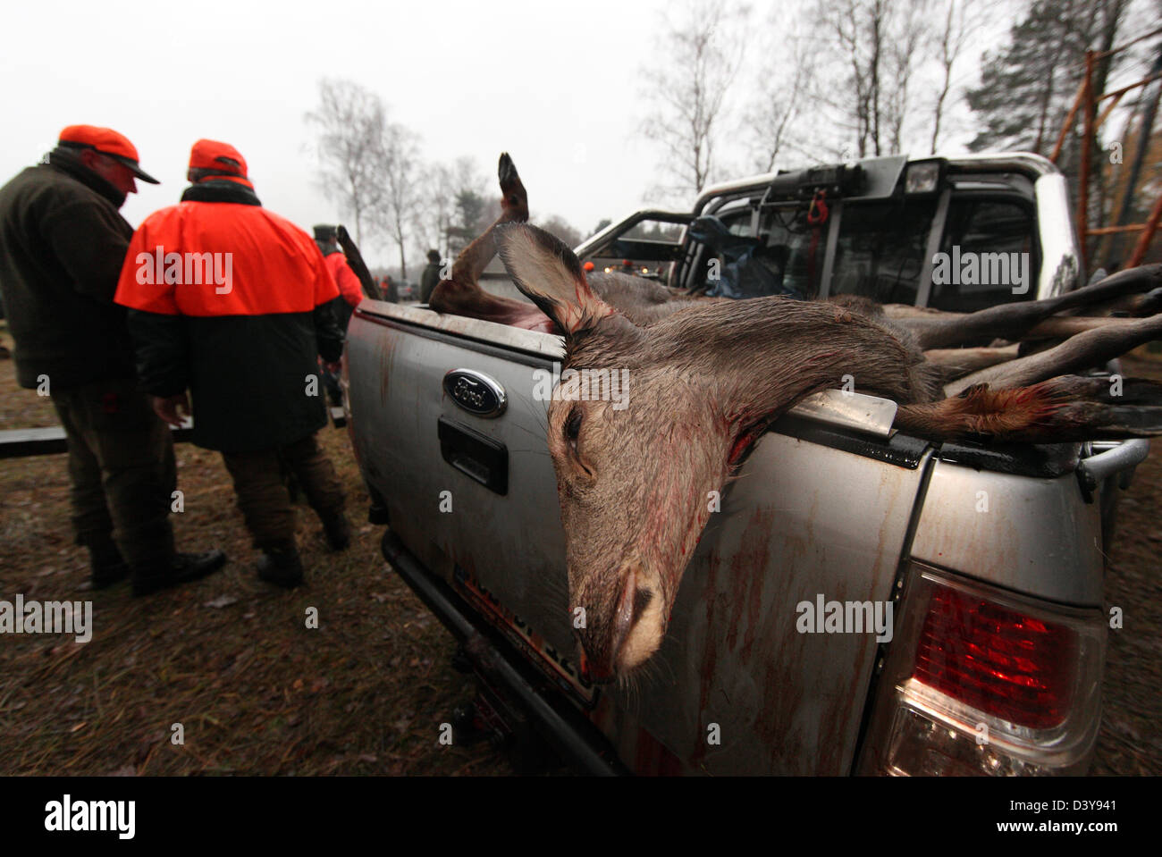 Lehnitz, Germany, place killed deer depends on the loading area of a car Stock Photo