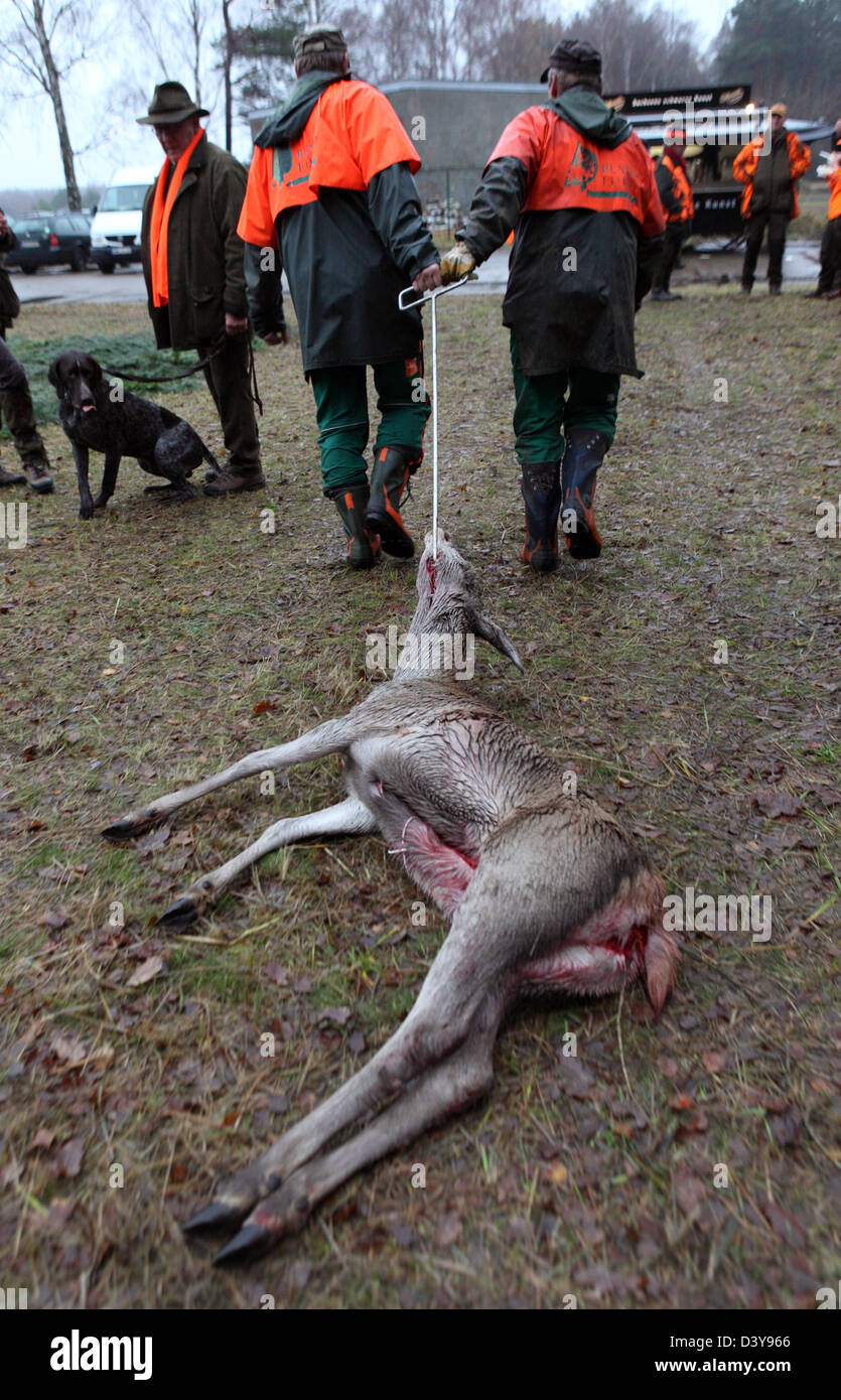Lehnitz, Germany, Jaeger pull a shot deer behind him Stock Photo