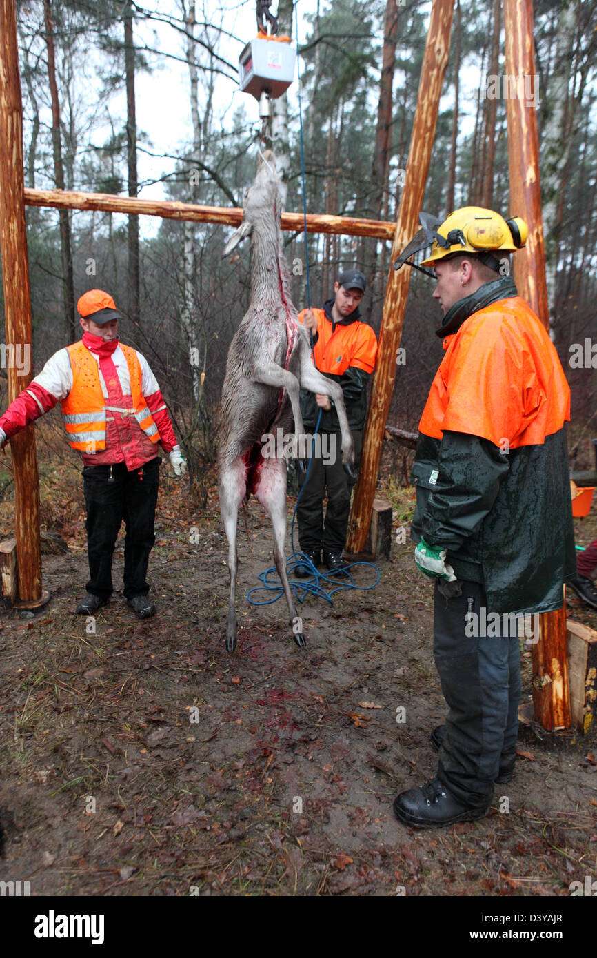 Lehnitz, Germany, place killed deer is weighed Stock Photo