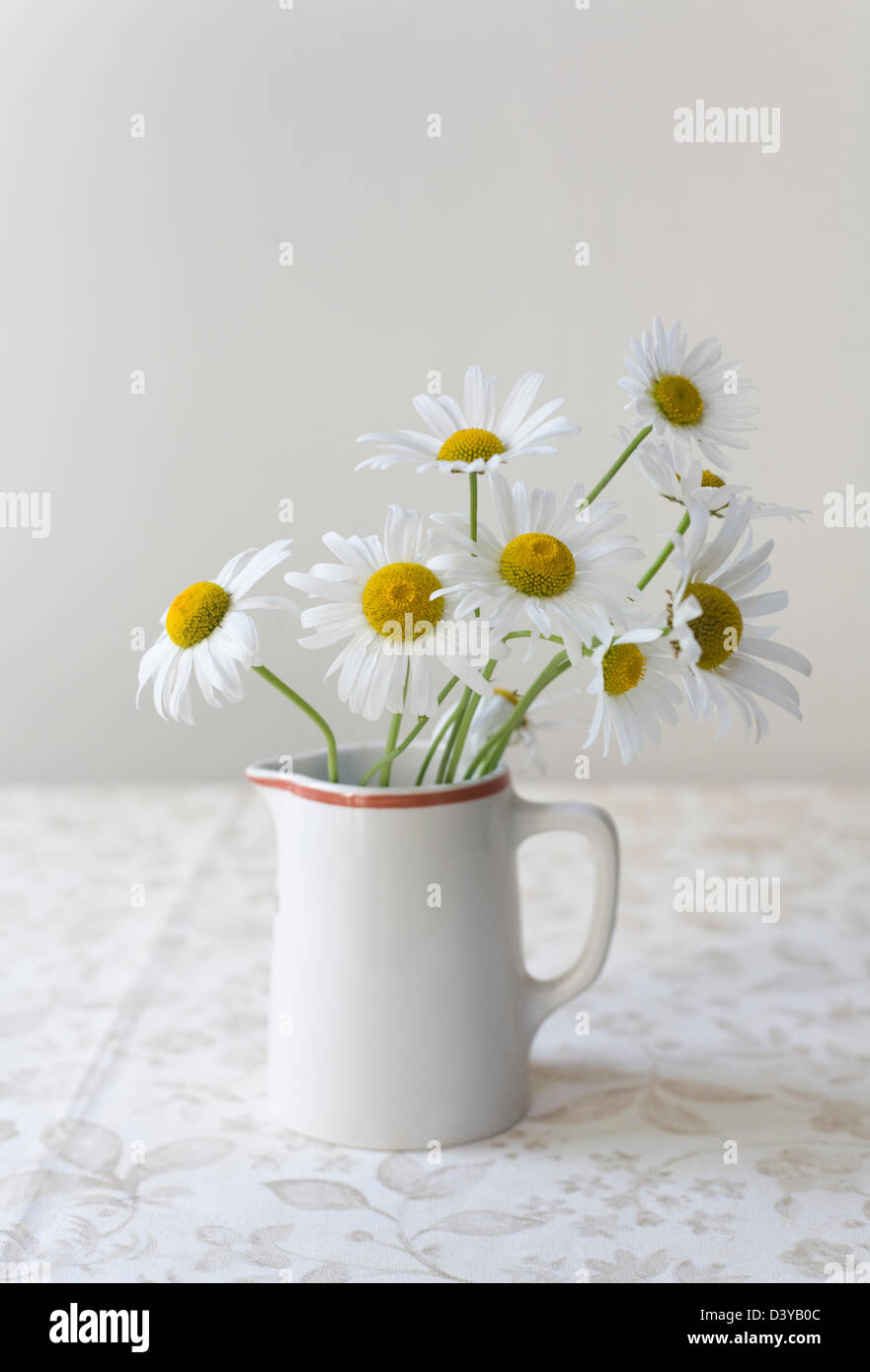 White daisies with yellow centers in a small jug on a lightly patterned table cloth - Stock Image