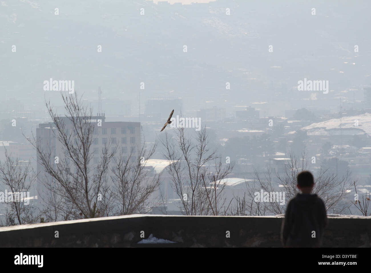 an owl circle the air above Kabul, Afghanistan. - Stock Image