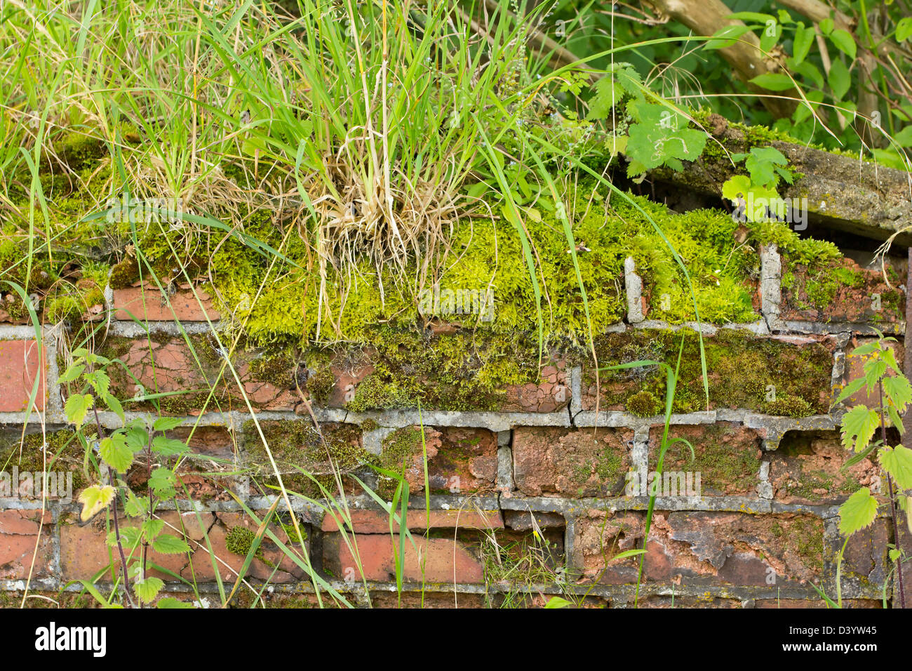 Background of a crumbling wall covered in moss and weeds - Stock Image