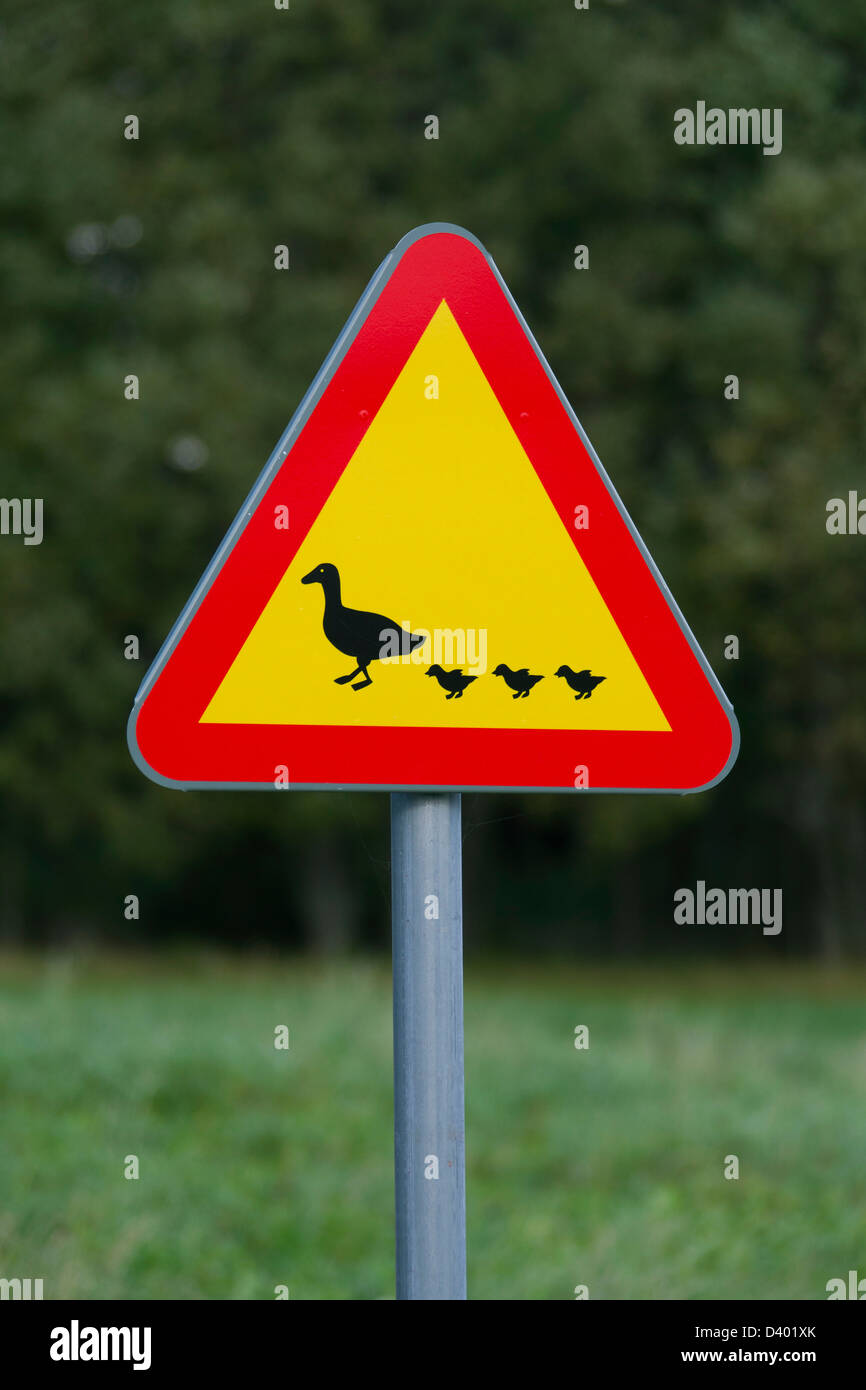 Warning sign for waterfowl and ducks crossing the road - Stock Image