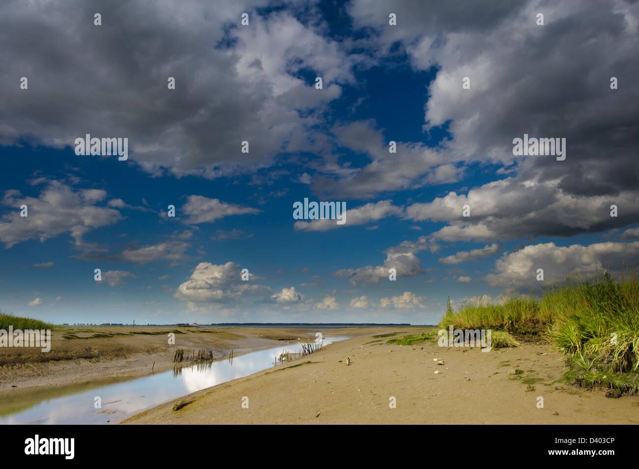 Tidal mudflats at  in the' Verdronken Land van Saeftinghe' , Zeeuws Vlaanderen. Zeeland, Netherlands - Stock Image