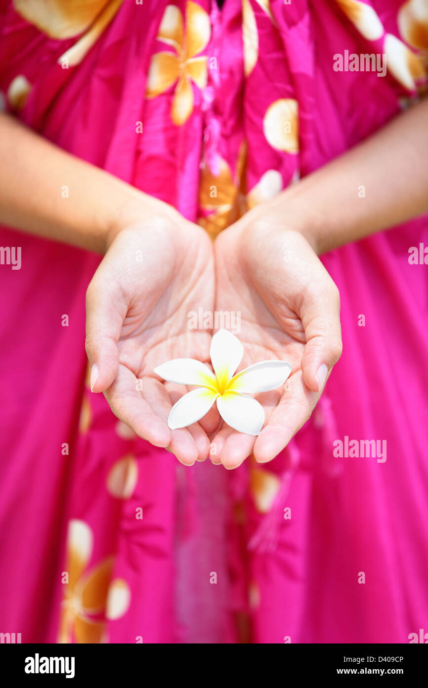 Hawaiian flower stock photos hawaiian flower stock images alamy hawaiian flower in cupped hands of woman wearing sarong hawaii concept with typical plumeria flowers izmirmasajfo