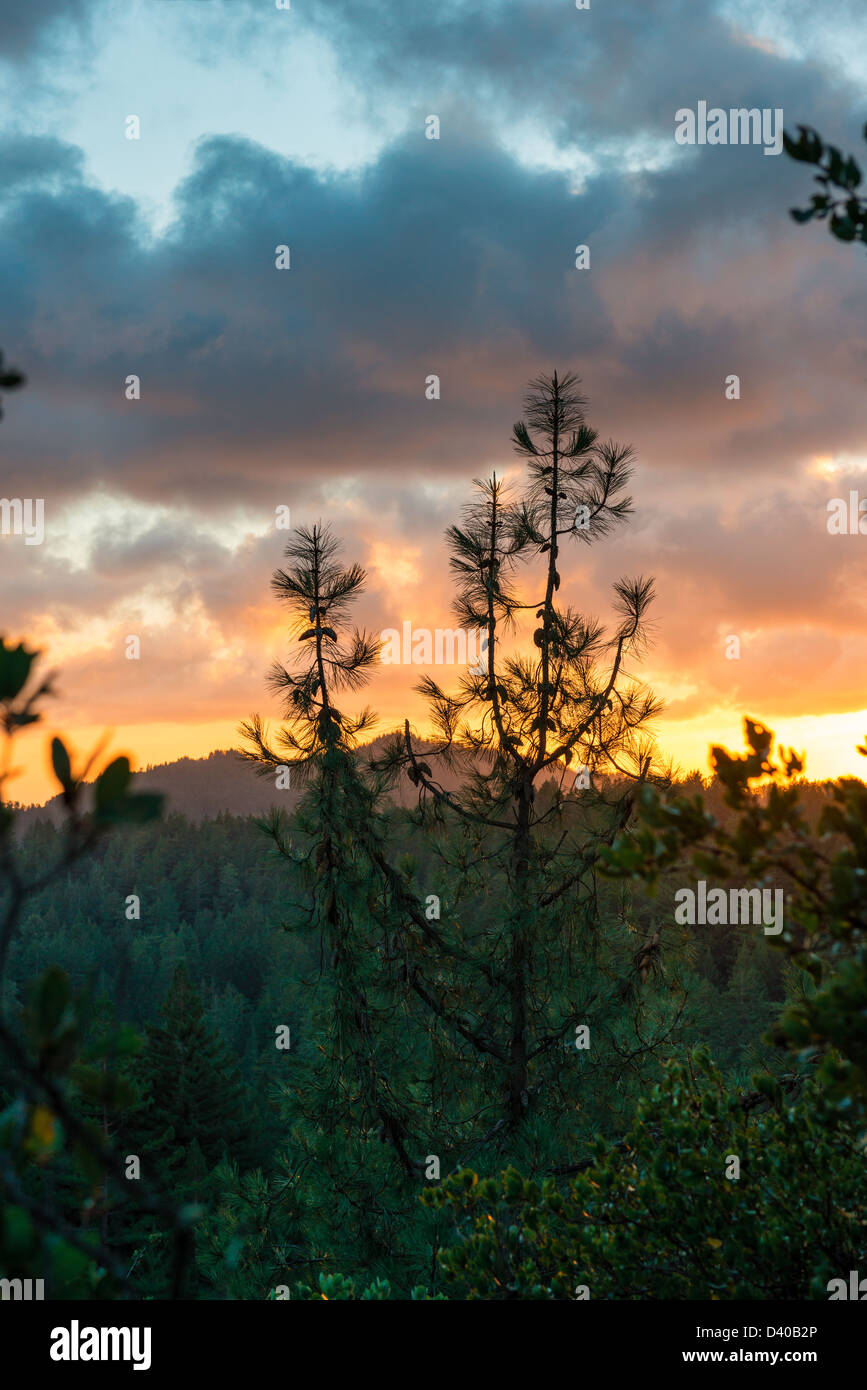 SUNSET IN BIG BASIN REDWOODS STATE PARK - Stock Image