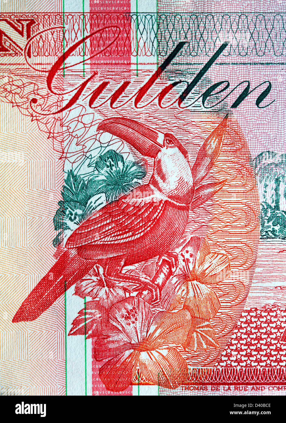 Toucan from 10 Gulden banknote, Suriname, 1998 - Stock Image