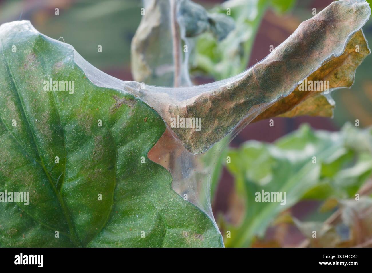 Spider mite on houseplants