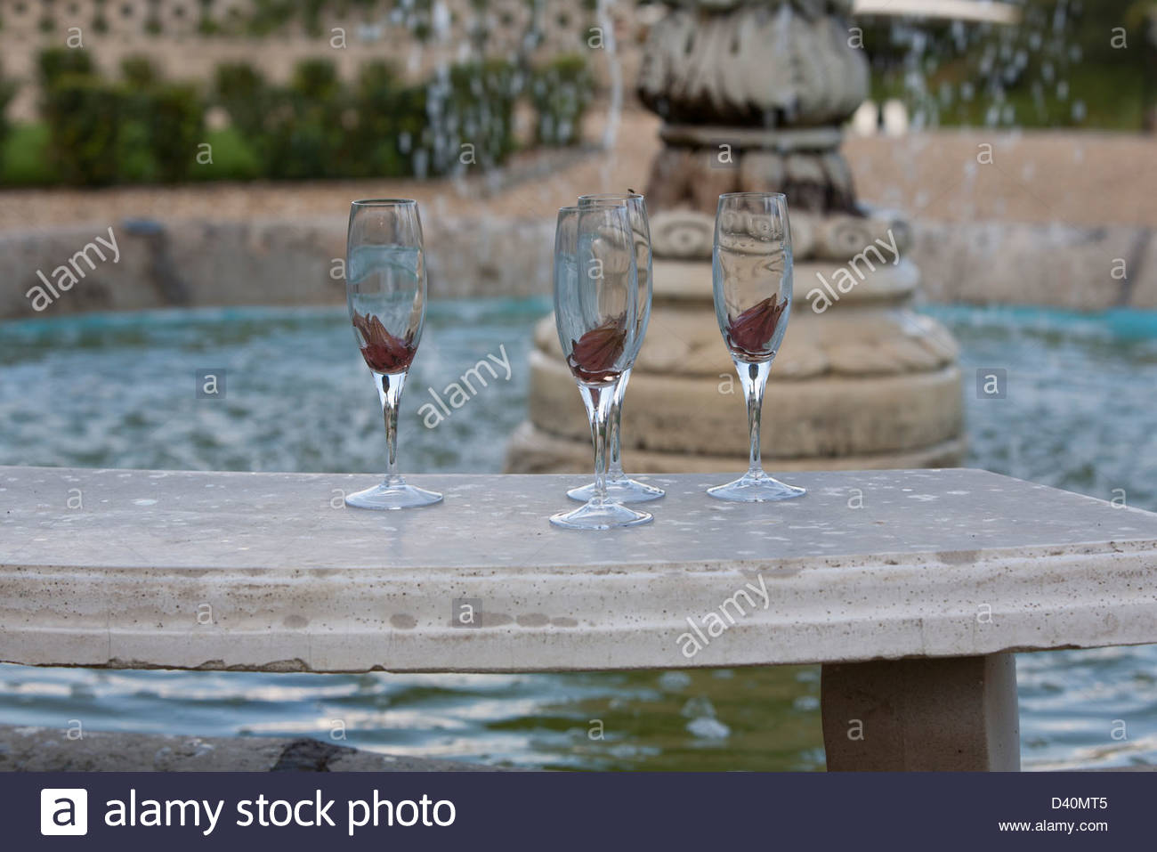 Hibiscus flowers stock photos hibiscus flowers stock images alamy champagne glasses with hibiscus flowers on a stone seat beside a fountain stock image izmirmasajfo