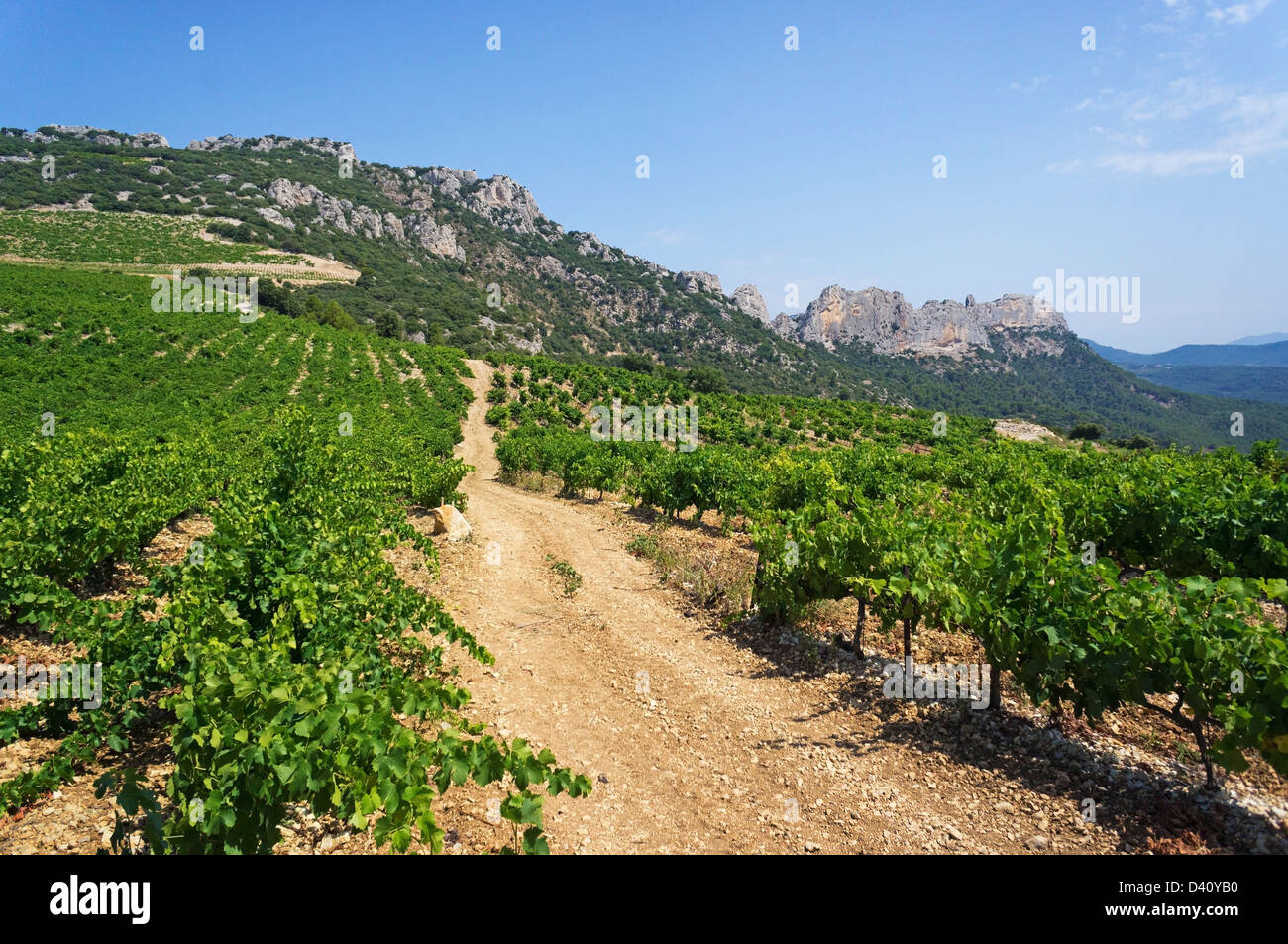 Vineyards in the summer in the Dentelle de Montmirail National Park, Vacluse, Provence, South of France, Europe - Stock Image