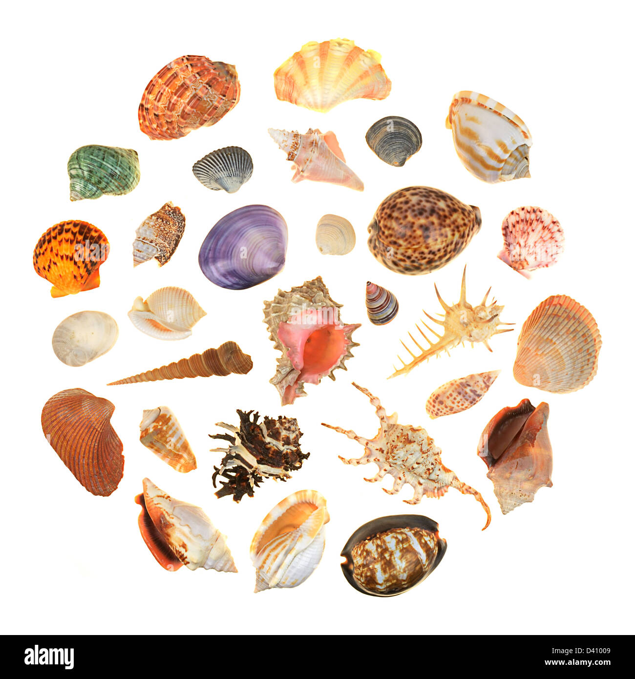 group of sea shells in a circle - Stock Image
