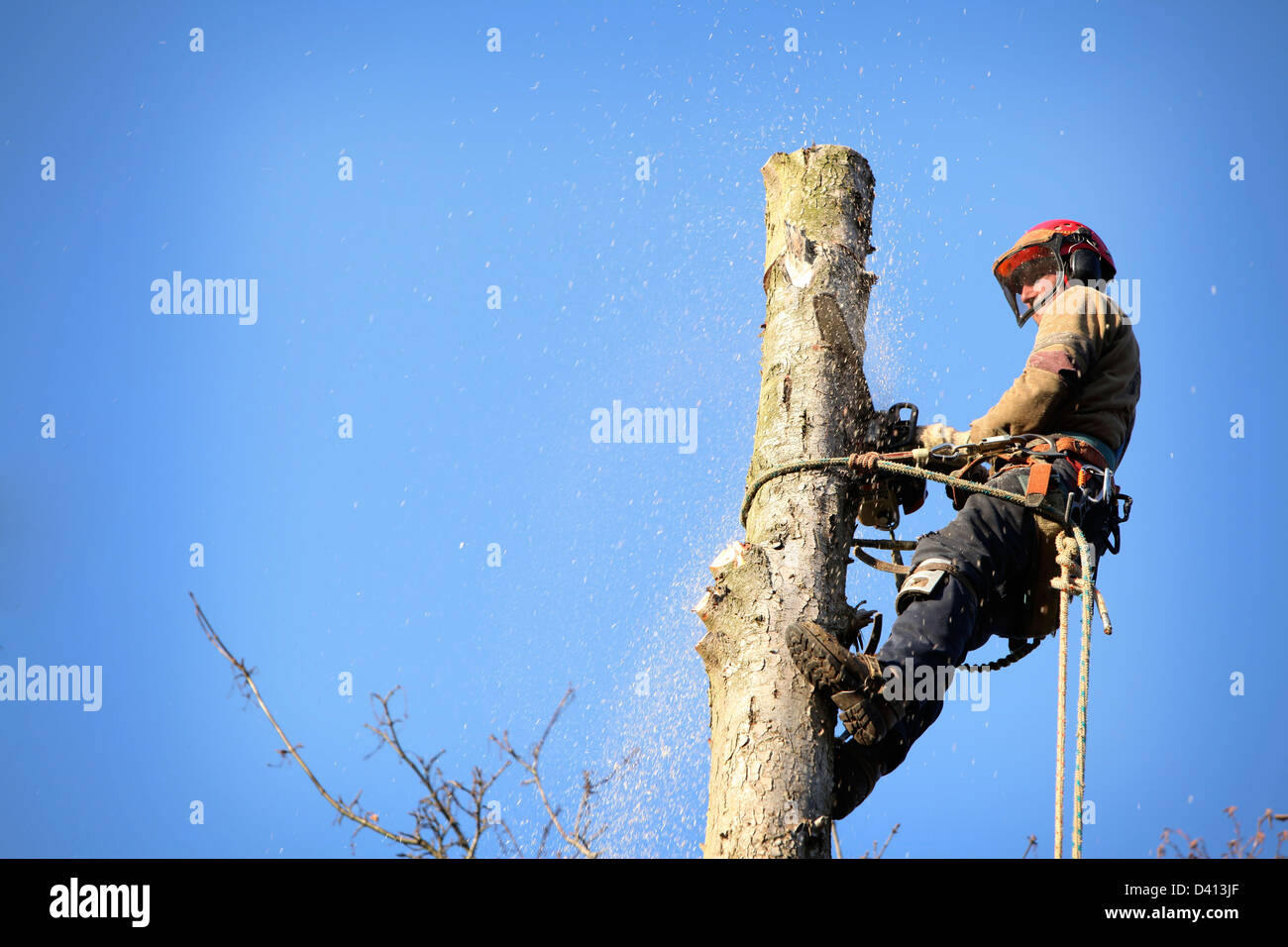 An arborist cutting a tree with a chainsaw - Stock Image