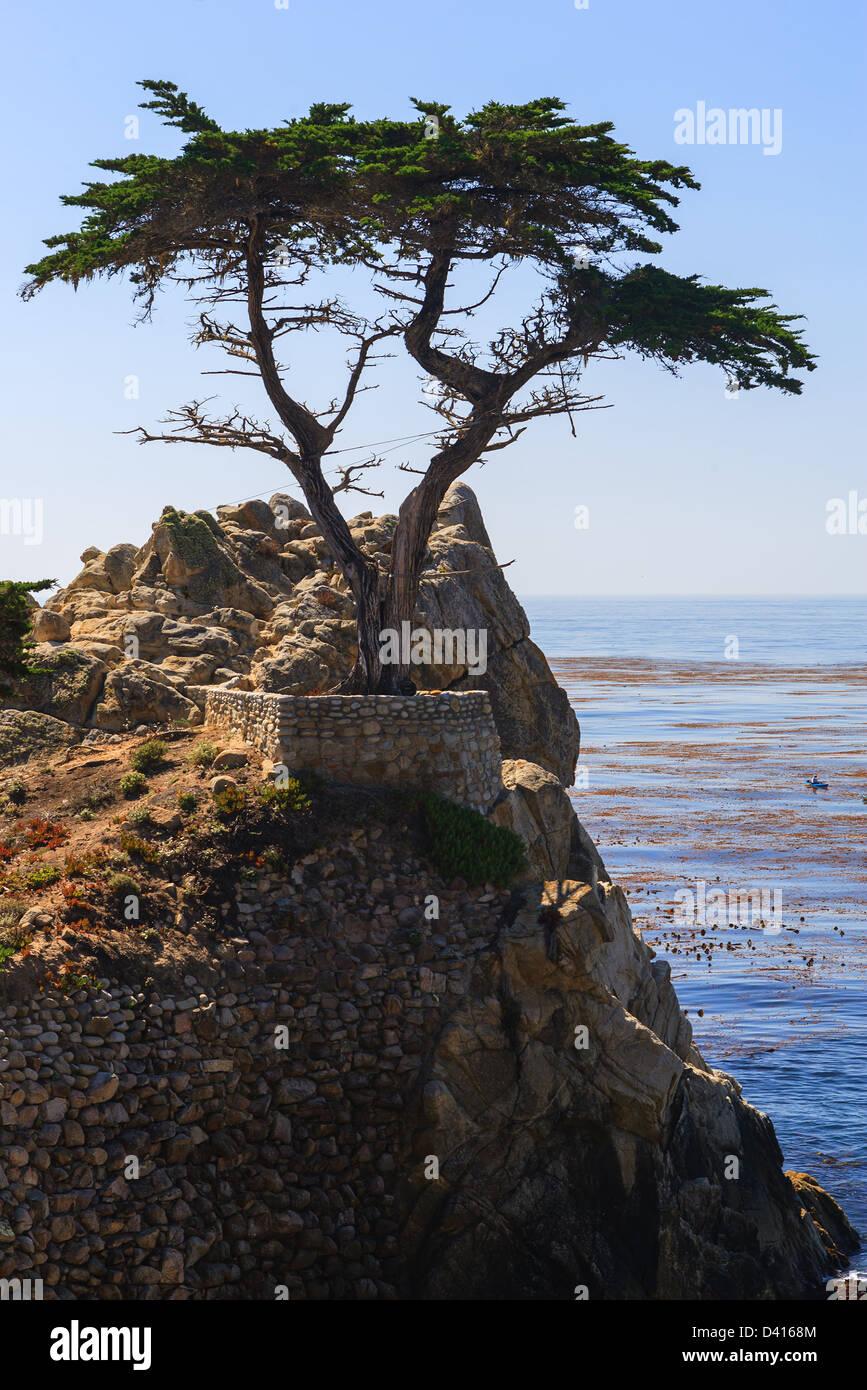 Pebble Beach, California, Lone Cypress - Stock Image