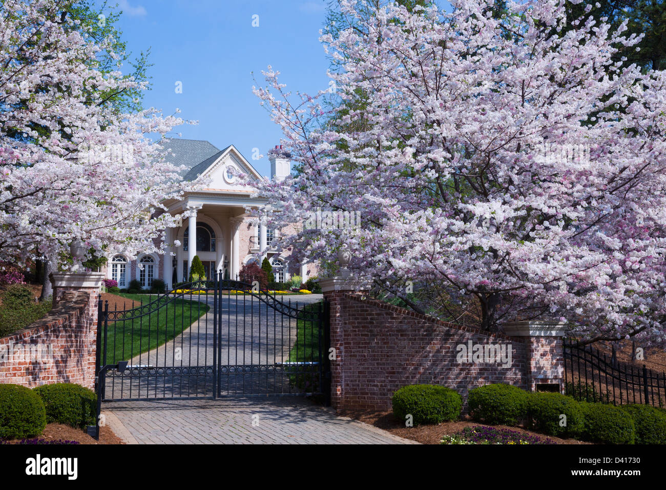 Colorful spring pink cherry blossom on cherry trees in full bloom at colorful spring pink cherry blossom on cherry trees in full bloom at gated entrance to elegant stately home in atlanta georgia mightylinksfo