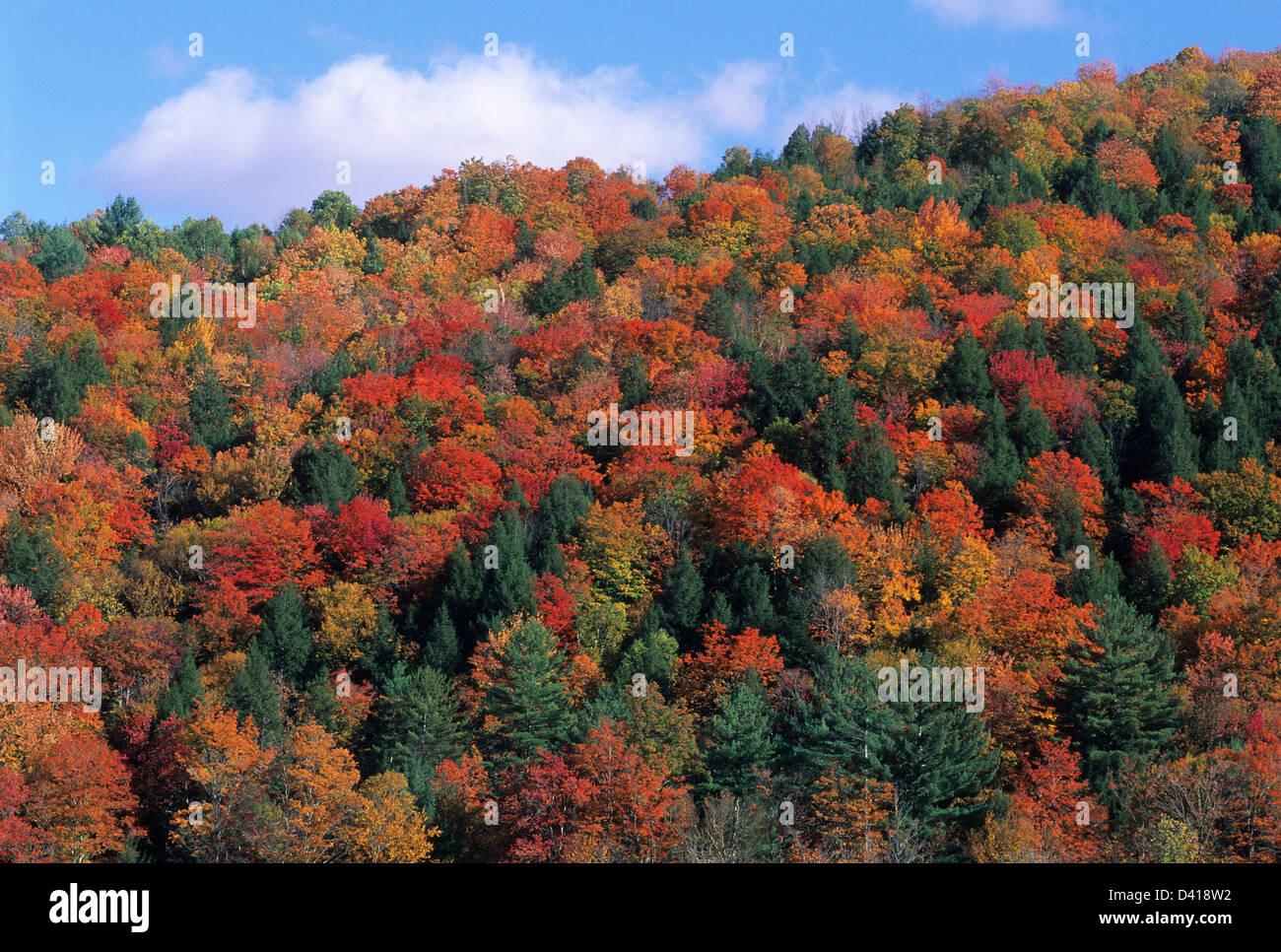 Elk280-1089 Vermont, East Vermont, autumn foliage along rural highway - Stock Image