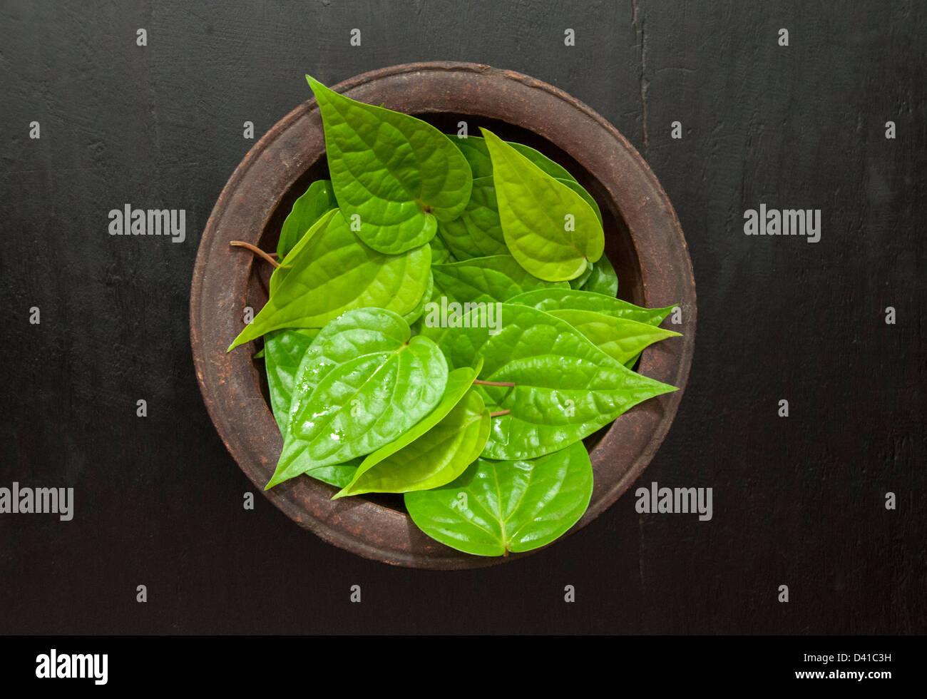 Betel medicinal leaves kept on a pot - Stock Image