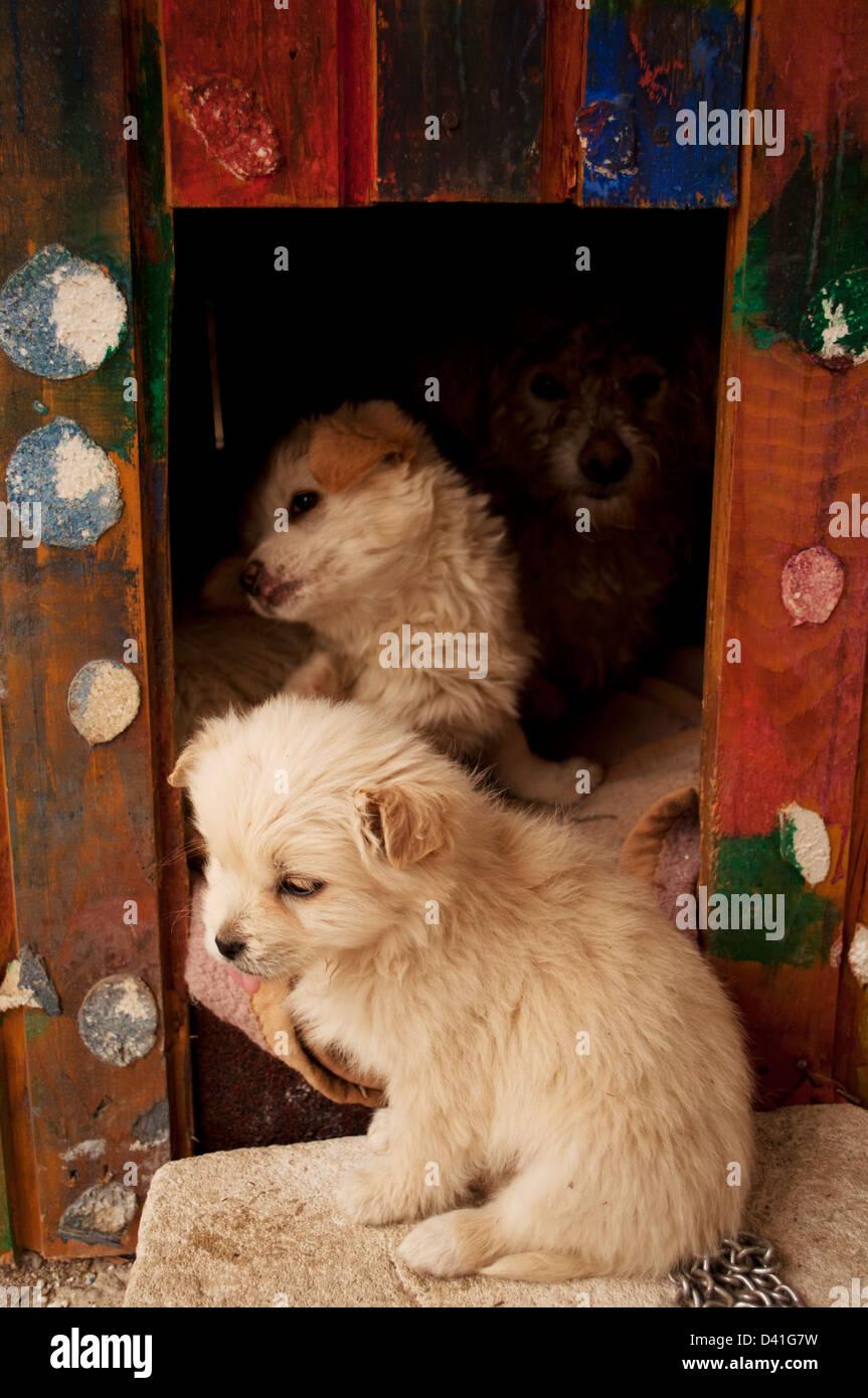 Dog family - Stock Image