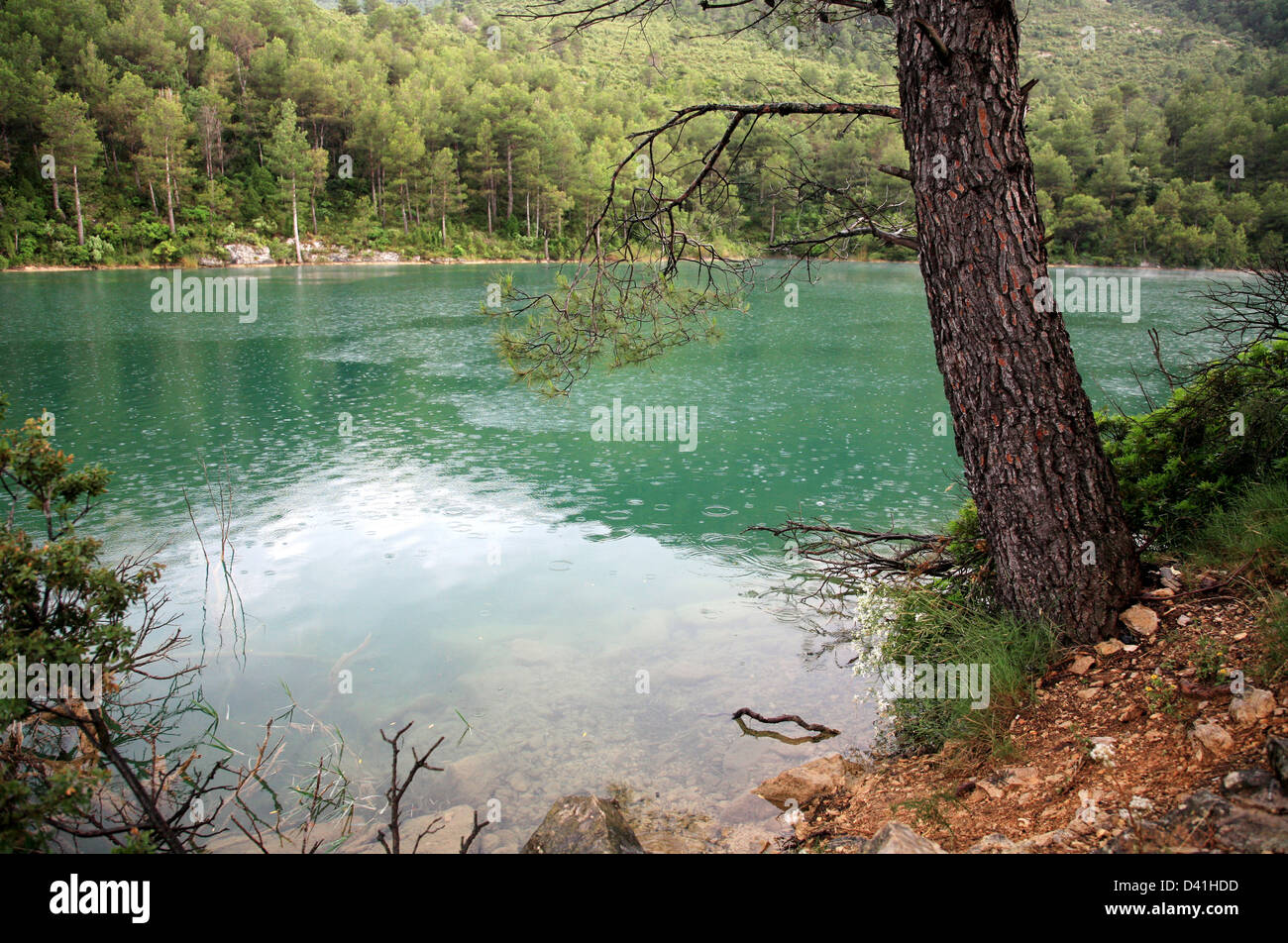 Pine tree on background green lake, Spain - Stock Image