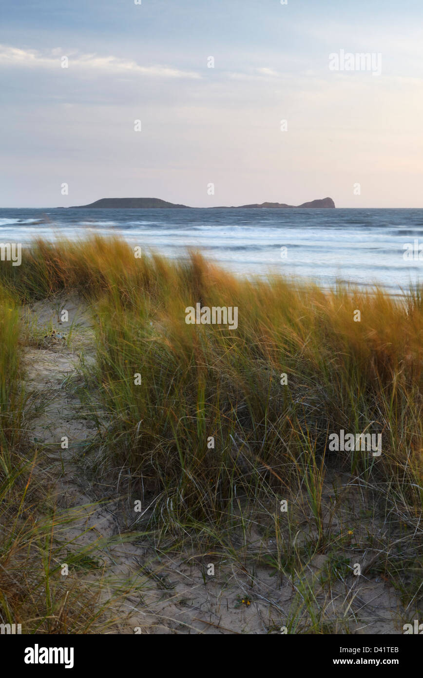 Dune Grasses bathed in warm golden light with Worms head in the distance, Rhosilli bay, Gower, South Wales - Stock Image