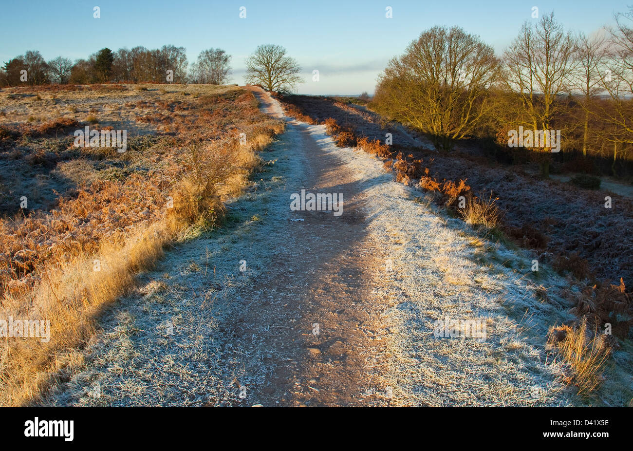 Early frosts first signs of winter on the Cannock Chase Area of Oustanding Natural Beauty in late Autumn Staffordshire - Stock Image