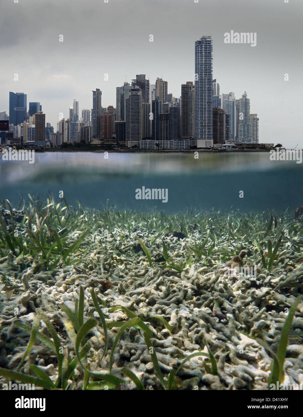 Coral reef destroyed by coastal development issues in Panama - Stock Image