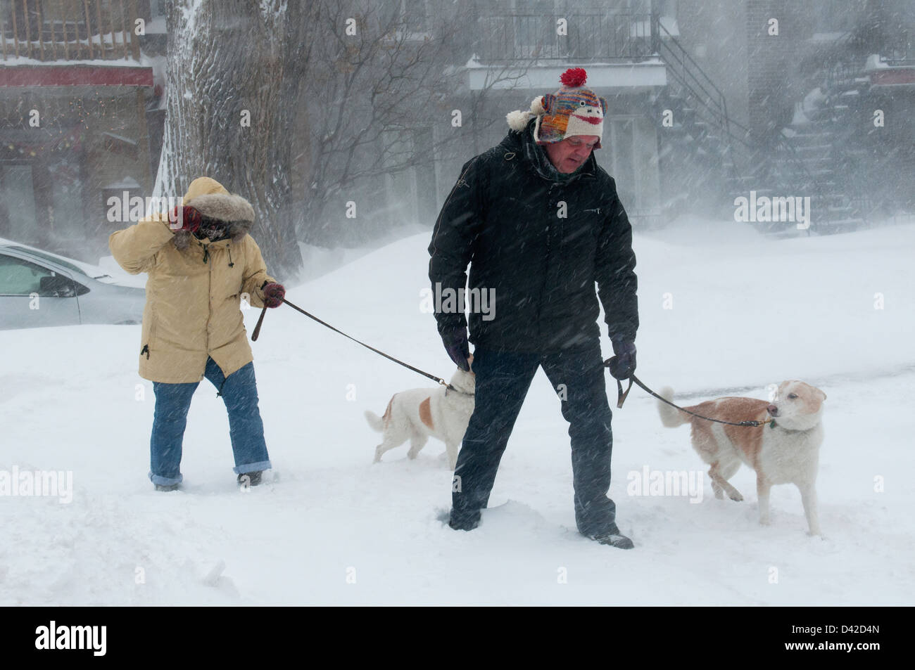 People walking their dogs during a snowstorm Montreal - Stock Image