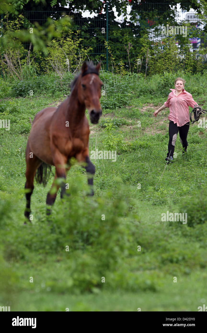 Muehlenbeck, Germany, girl tries to catch her horse on pasture - Stock Image