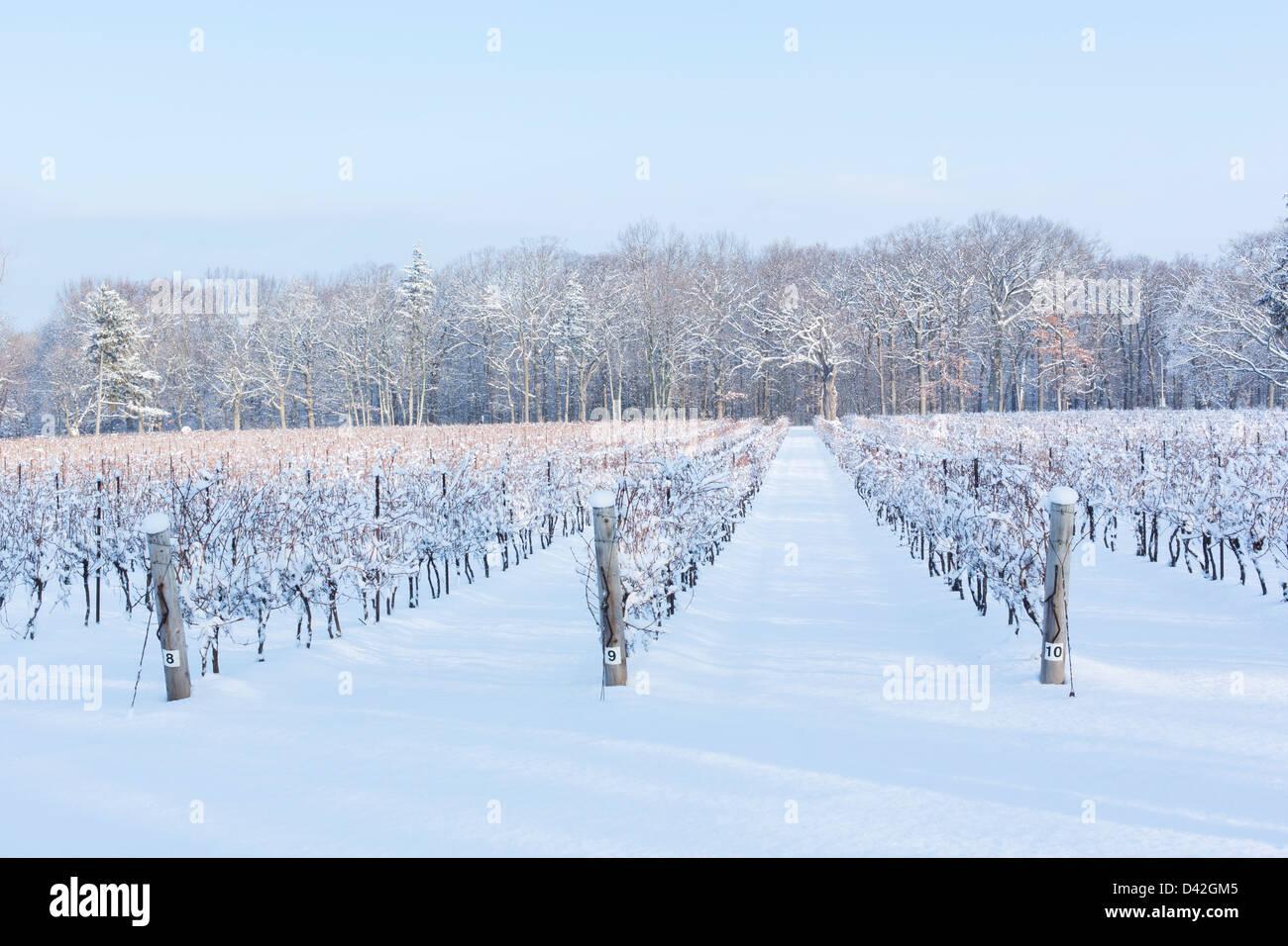 Canada,Ontario,Niagara-on-the-Lake, grape vineyard in winter - Stock Image