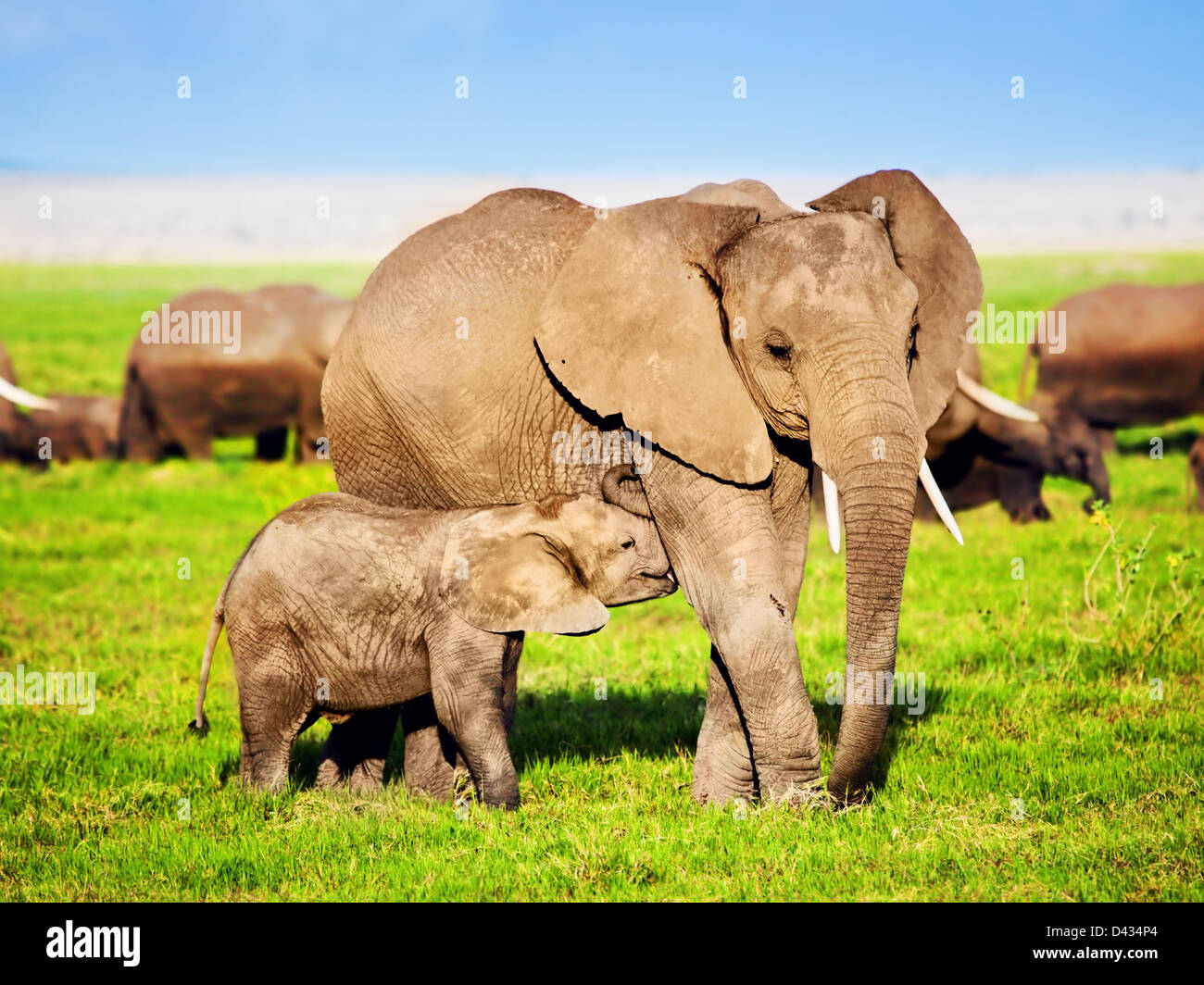 Mother African elephant and baby elephant in Amboseli National Park, Kenya, Africa (Loxodonta africana) - Stock Image