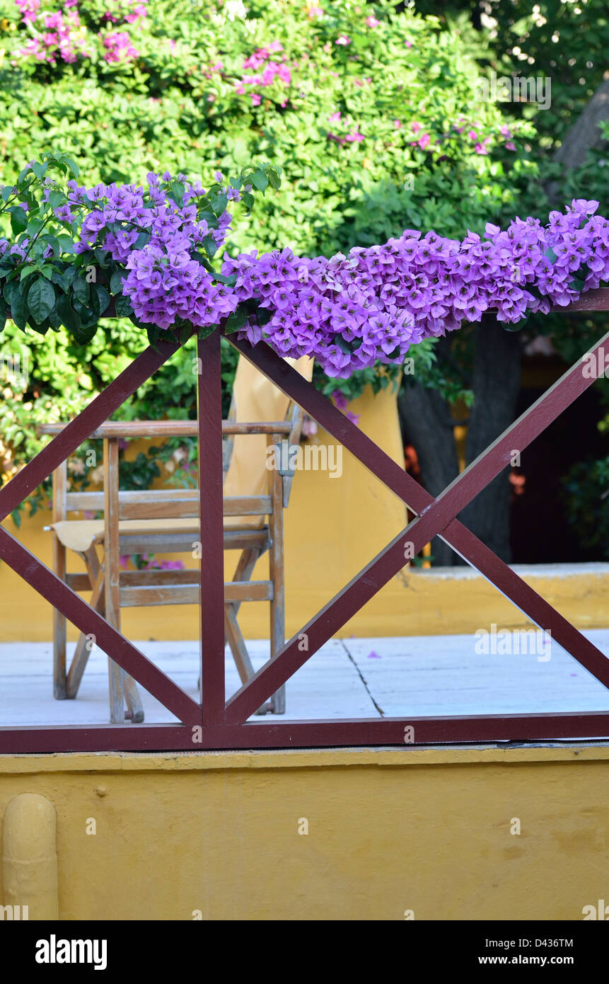 A violet bougainvillea in a pleasant guesthouse in Old Town Rhodes; Dodecanese. Greece. - Stock Image